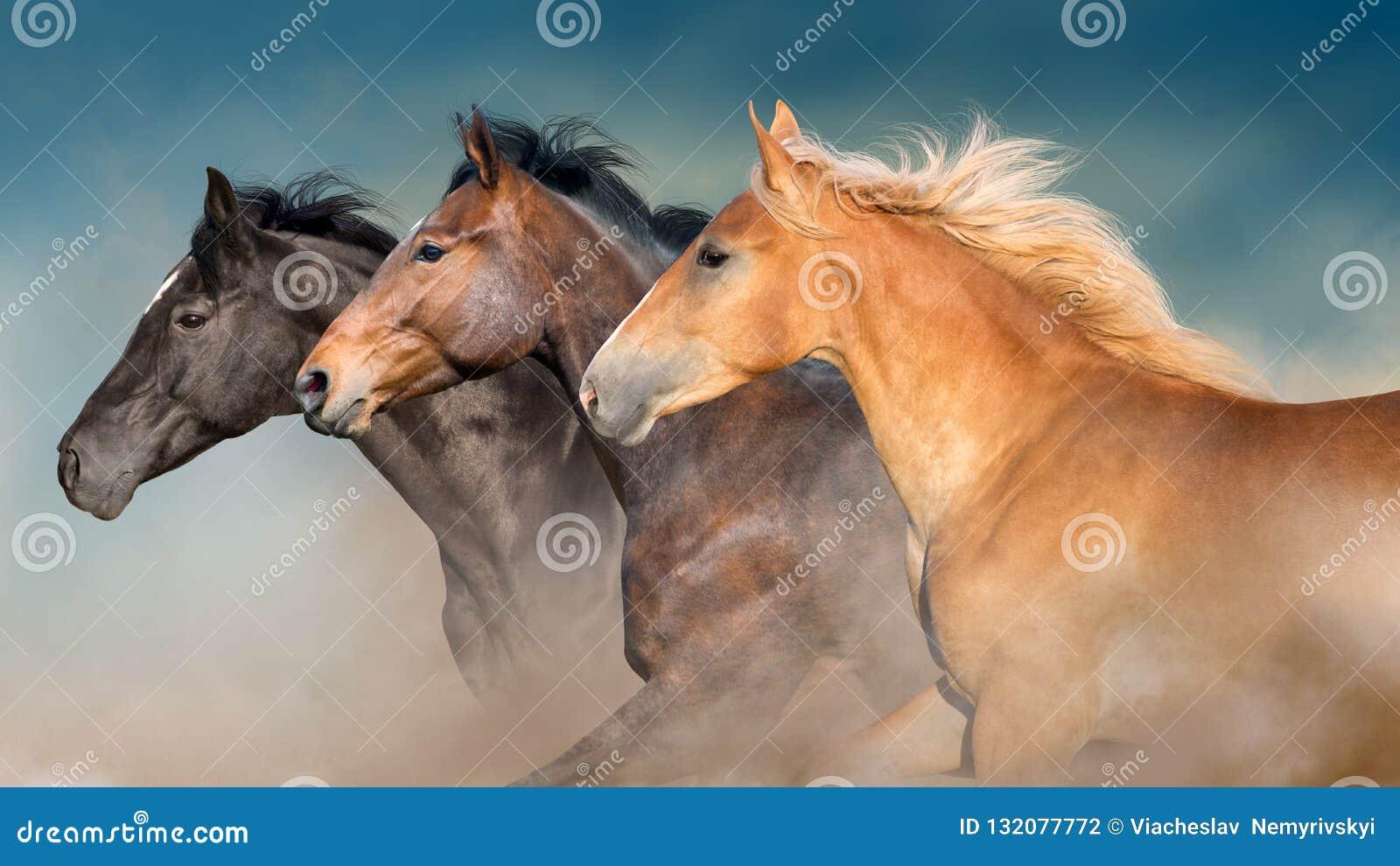 Los caballos reúnen el retrato en el movimiento