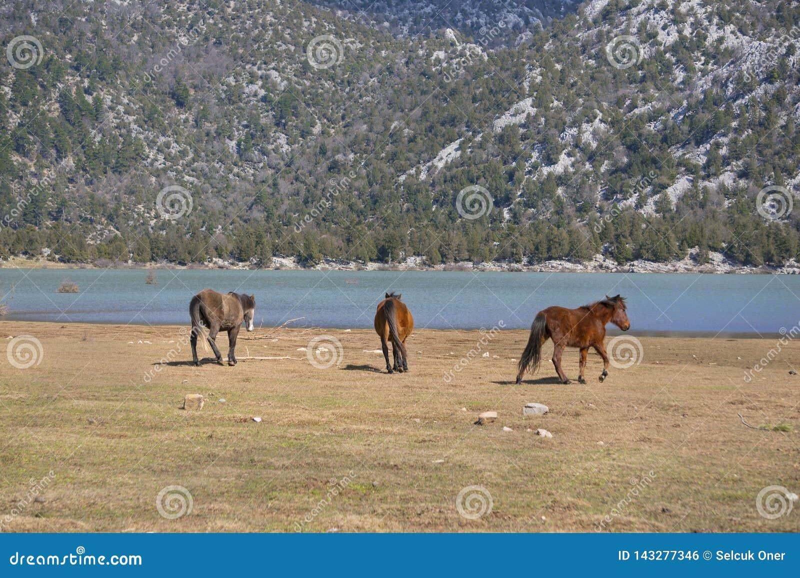 Los caballos salvajes están corriendo