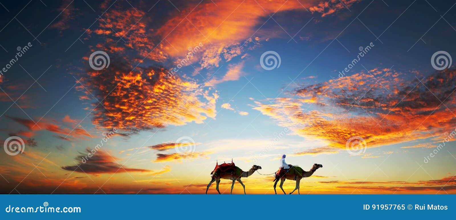 Los camellos en un Dubai varan debajo de un cielo dramático