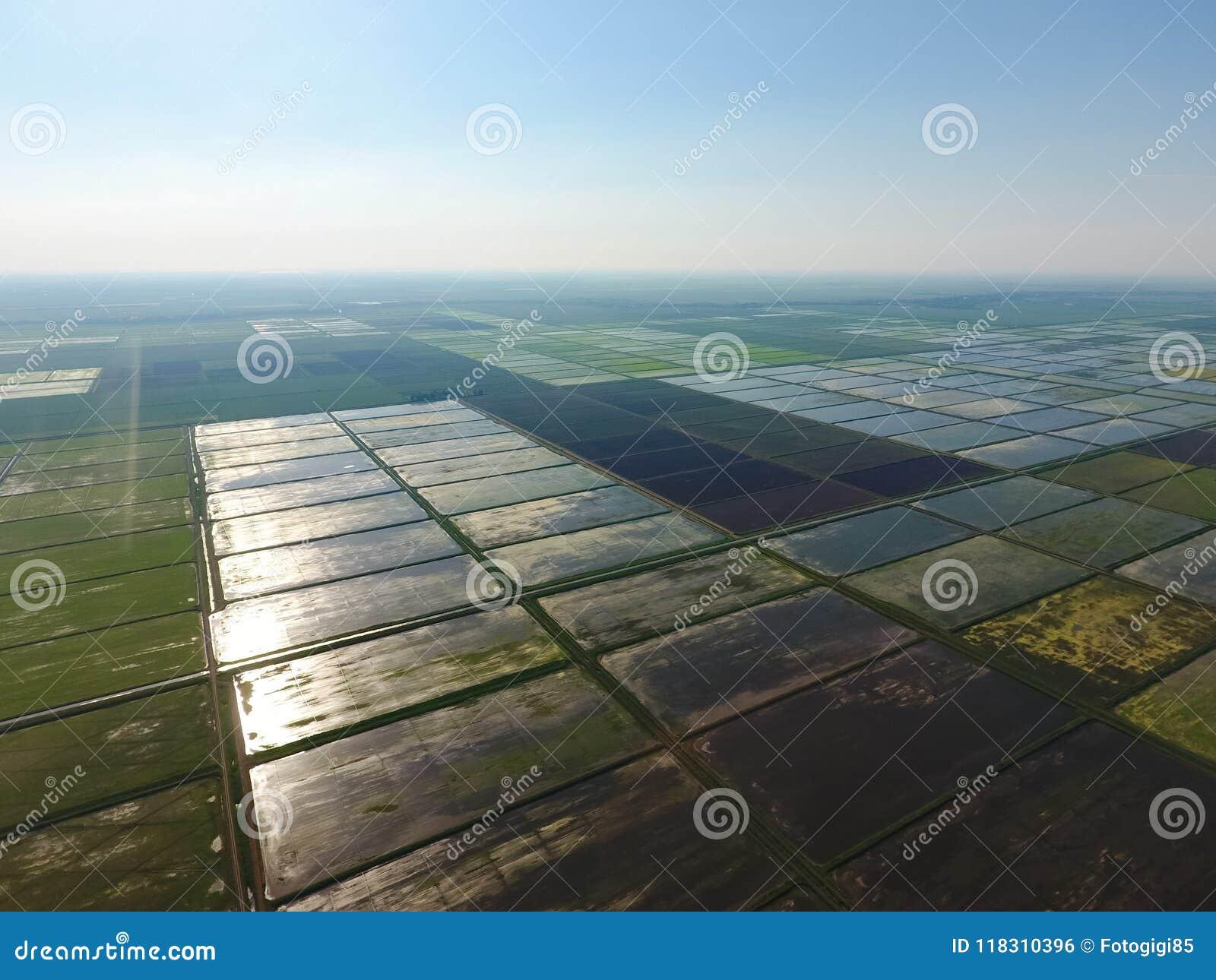 Los campos del arroz se inundan con agua Paisaje delante del sol Arroces de arroz inundados Métodos agronómicos de producir el ar