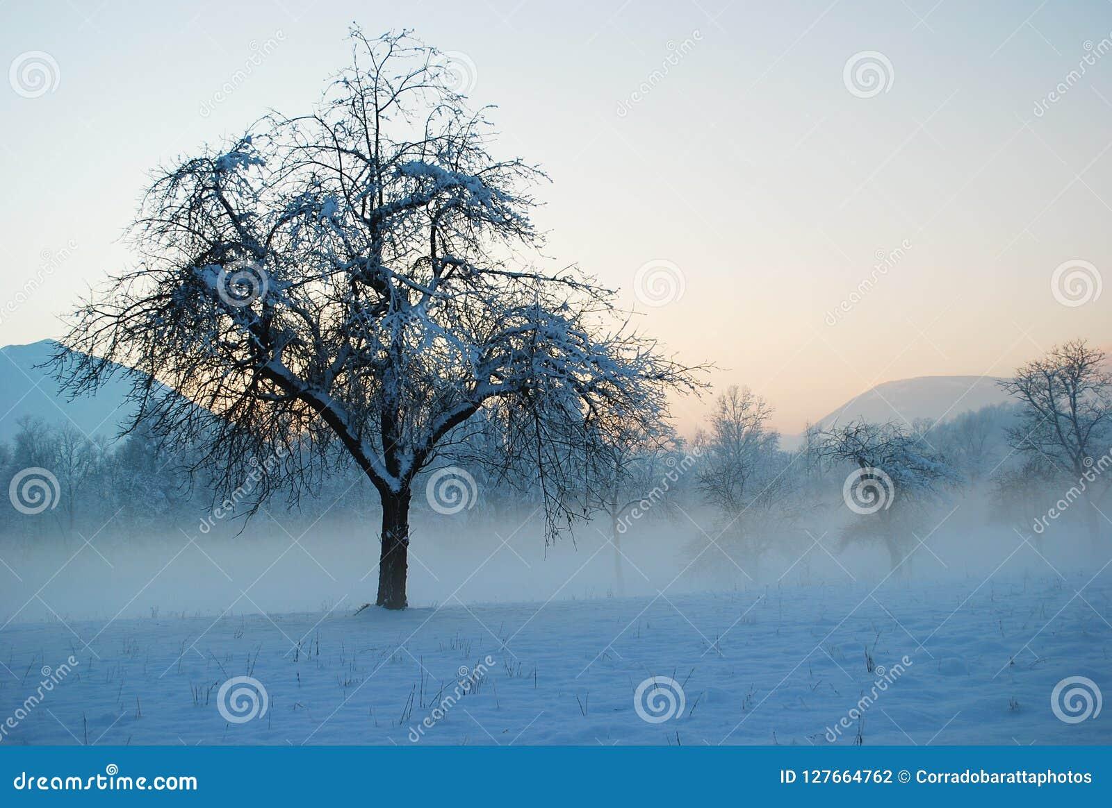 Los campos y los prados se sumergen en la niebla de la mañana