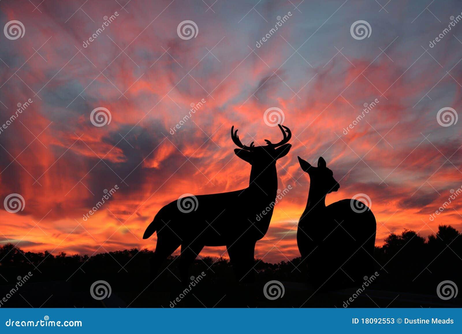 Los ciervos de Whitetail gozan del cielo nocturno