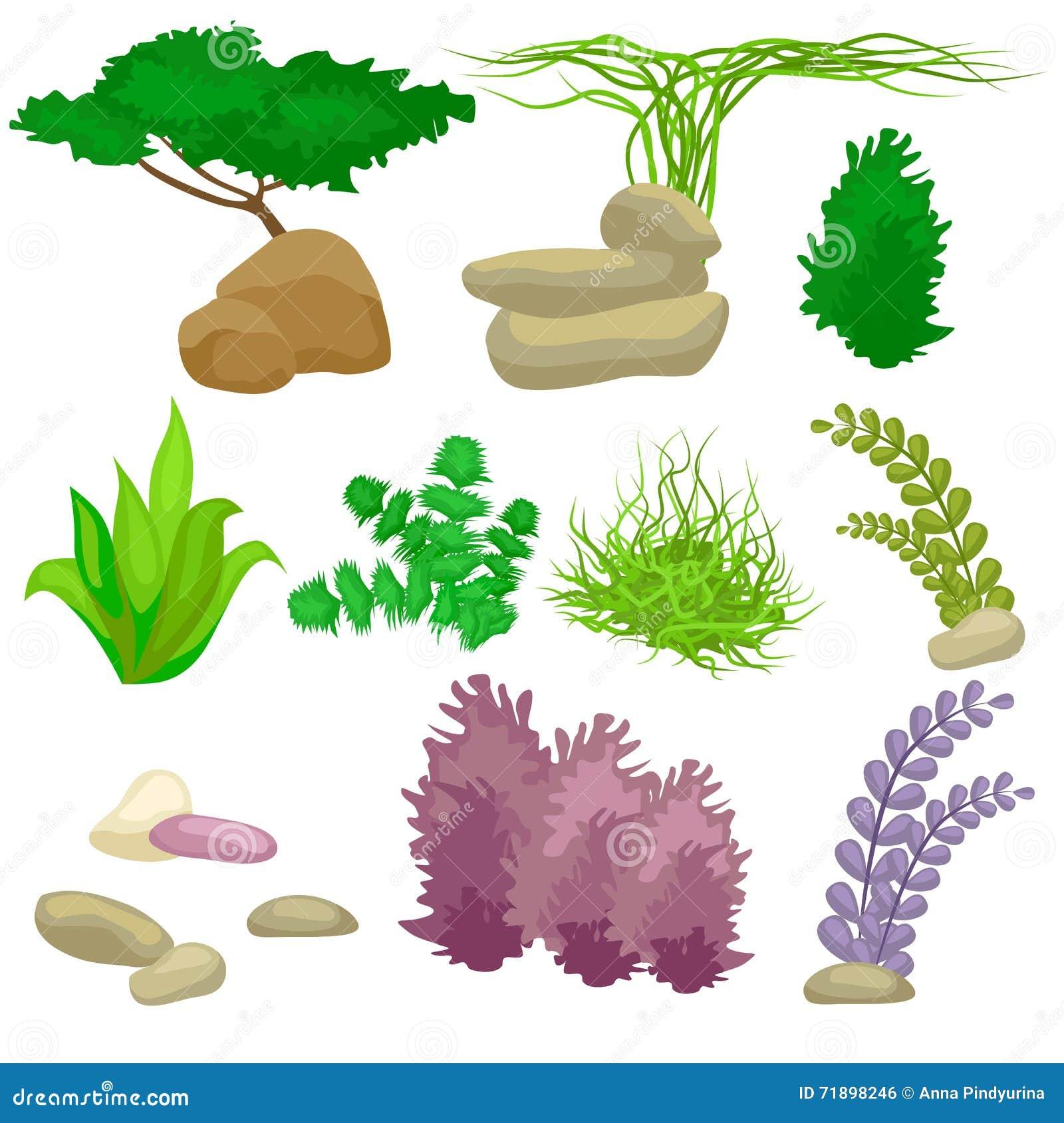 Los diferentes tipos de algas y de guijarros fijaron en for Diferentes tipos de viveros