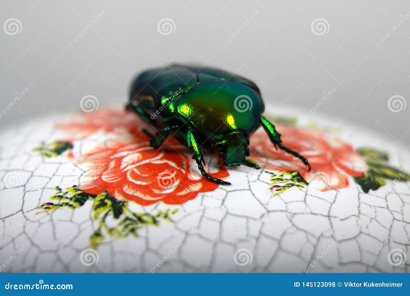 Los escarabajos grandes de la flor