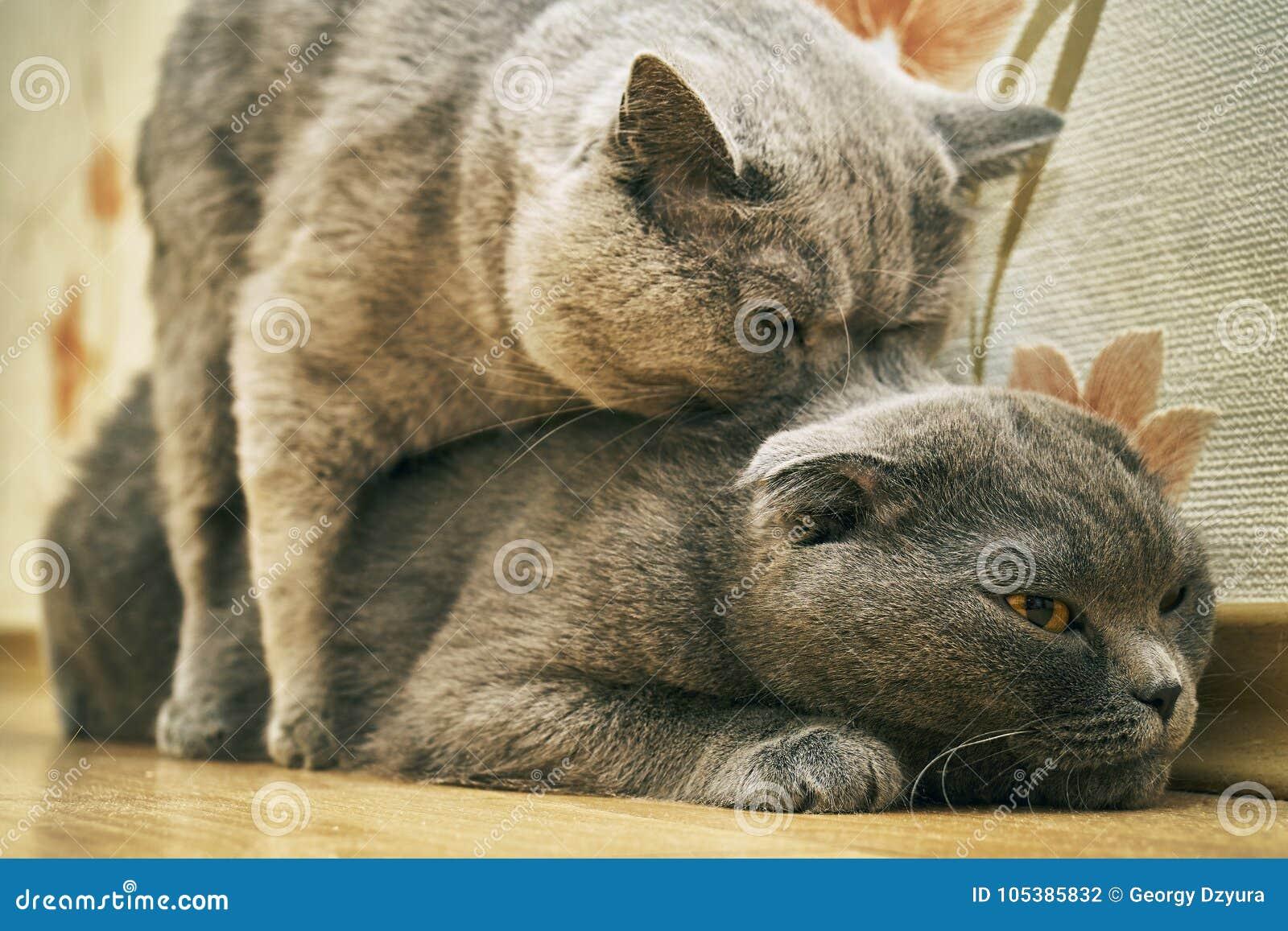 Como hacen el amor los gatos [PUNIQRANDLINE-(au-dating-names.txt) 43