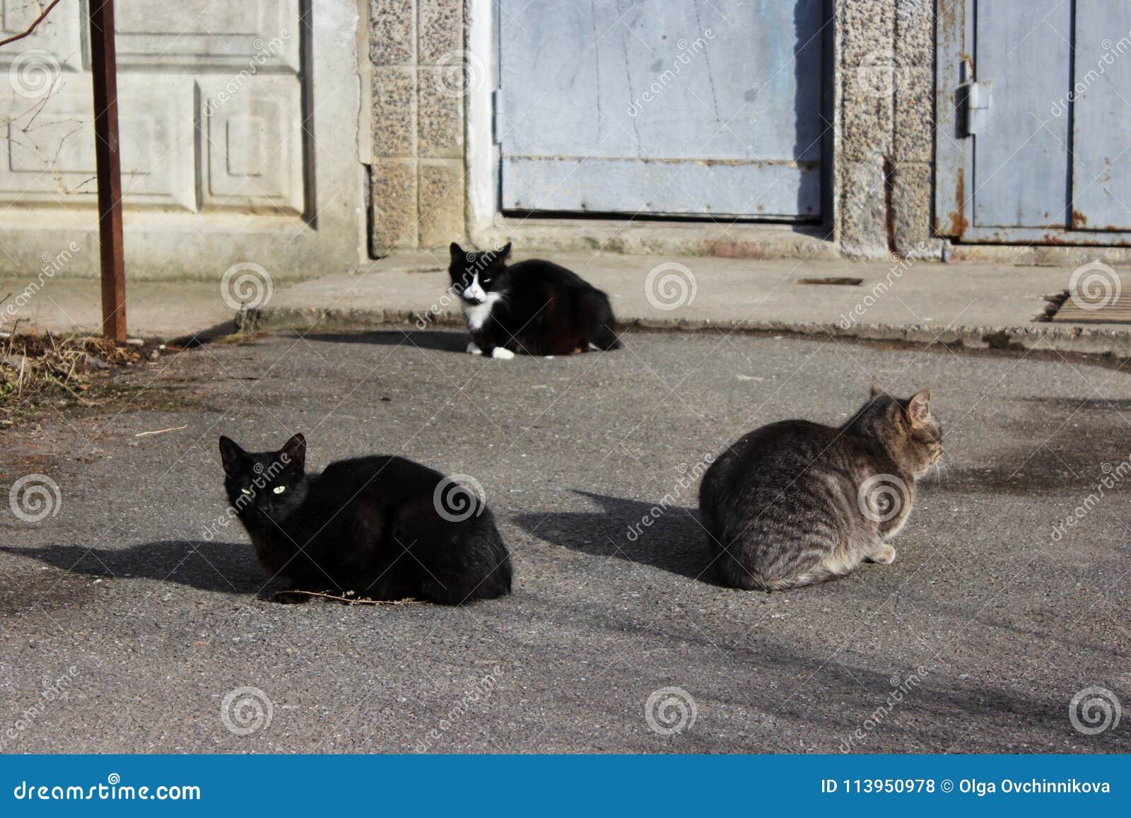 Los gatos sin hogar - ennegrézcase y el color de cañas - y un gatito blanco y negro están tomando el sol en el primer sol de la p