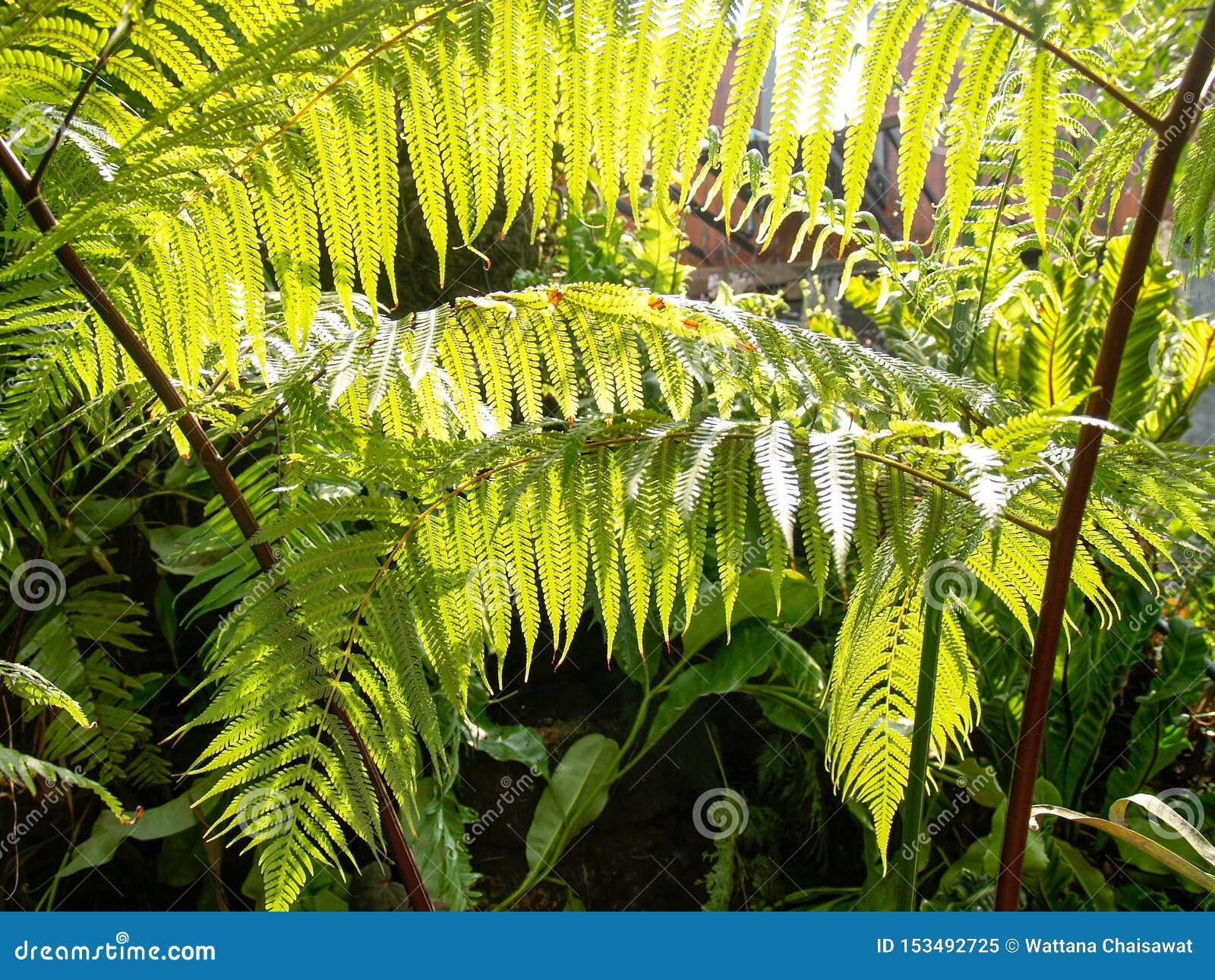 Los helechos en el jardín con luz del sol se envían a las hojas