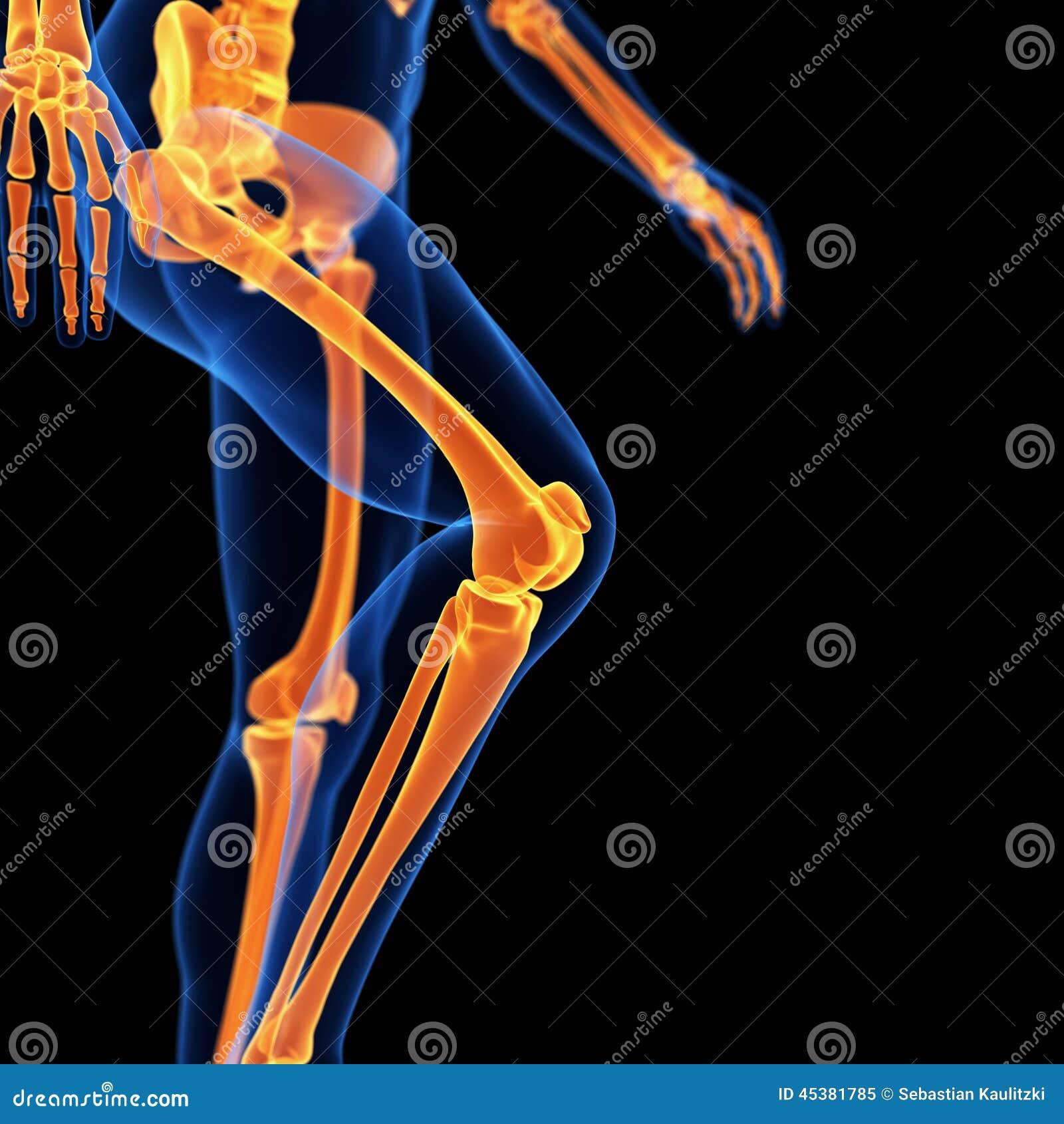 Los huesos de la pierna stock de ilustración. Ilustración de negro ...