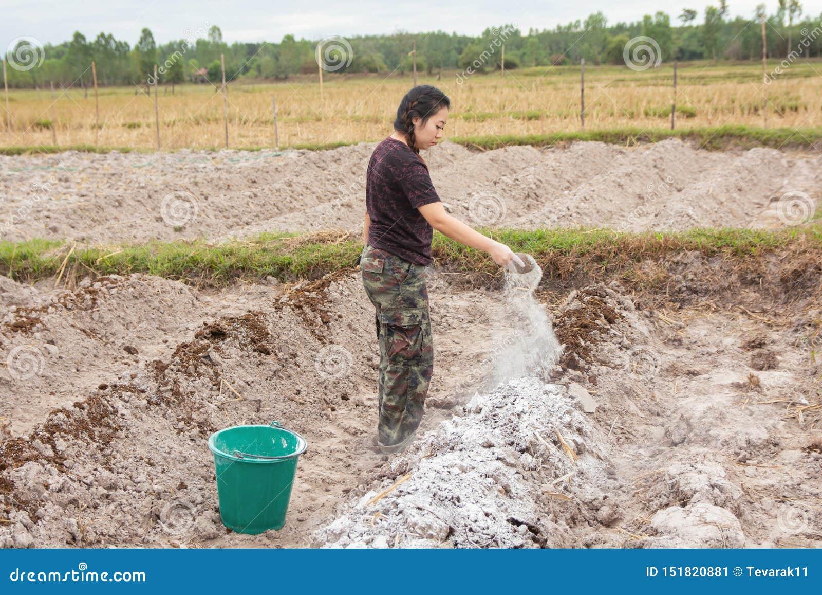 Los jardineros de la mujer pusieron el hidróxido de la cal o de calcio en el suelo para neutralizar la acidez del suelo