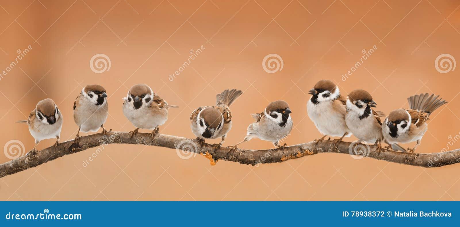 Los kleine lustige Vögel, die auf einer Niederlassung sitzen