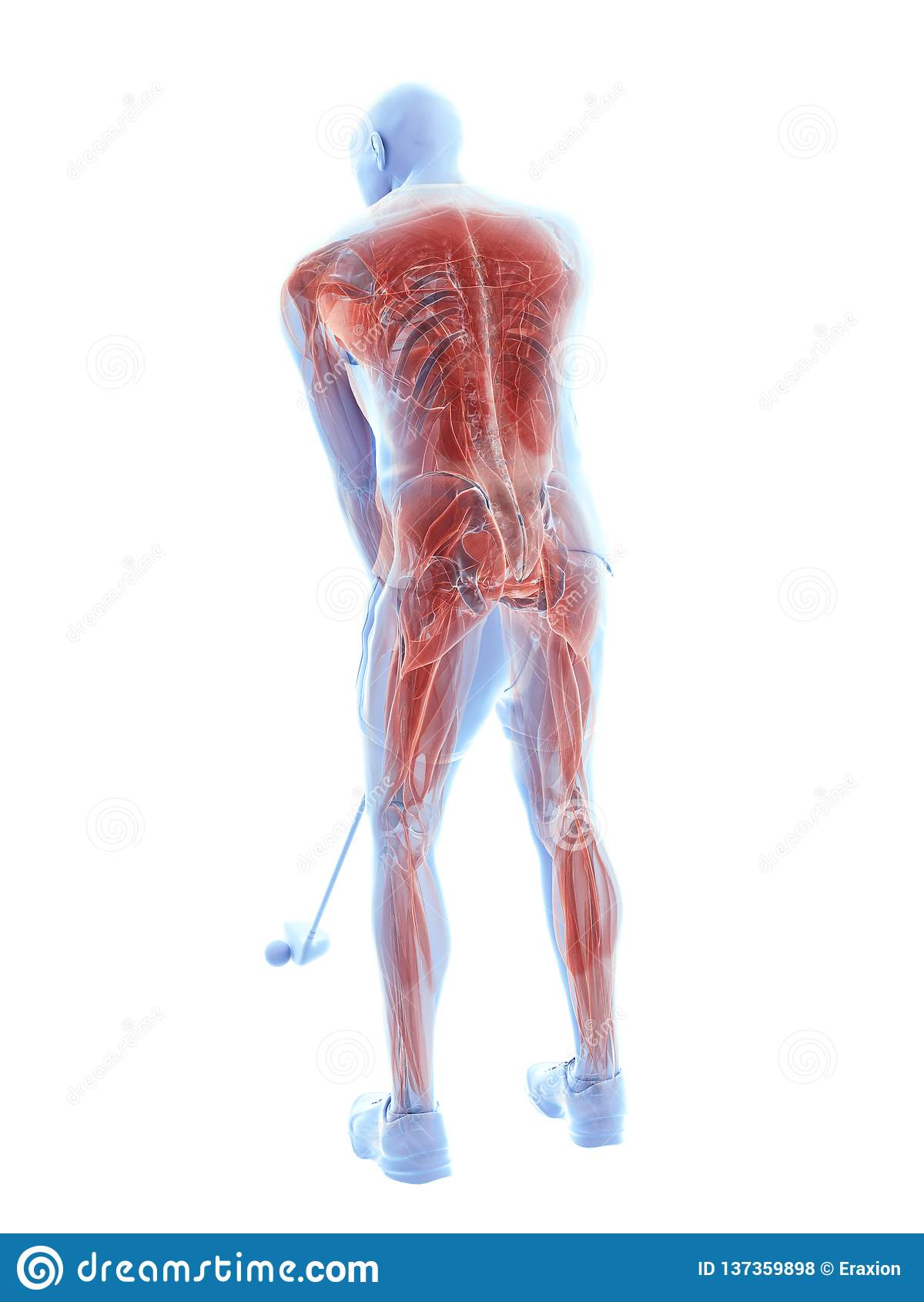 Los músculos de un jugador de golf