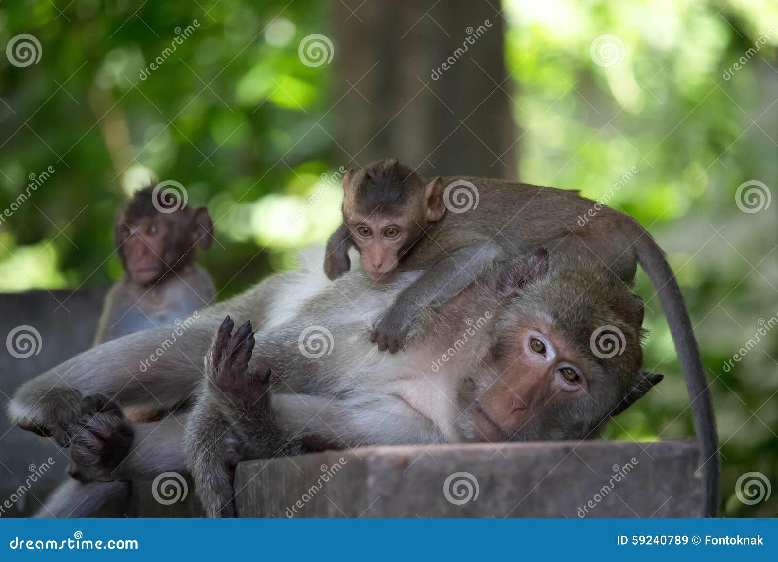 Download Los monos miman y niño imagen de archivo. Imagen de niño - 59240789