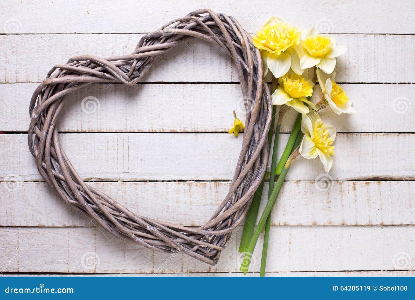 Los narcisos frescos del amarillo de la primavera florecen y corazón decorativo encendido
