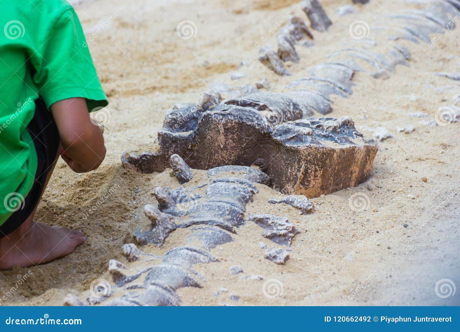Los niños están aprendiendo el dinosaurio de la historia, excavando la simulación de los fósiles de dinosaurio