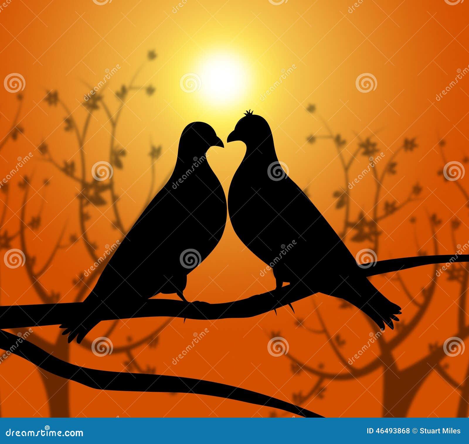 Los Pájaros Del Amor Representan La Compasión Y Al Novio Del Corazón