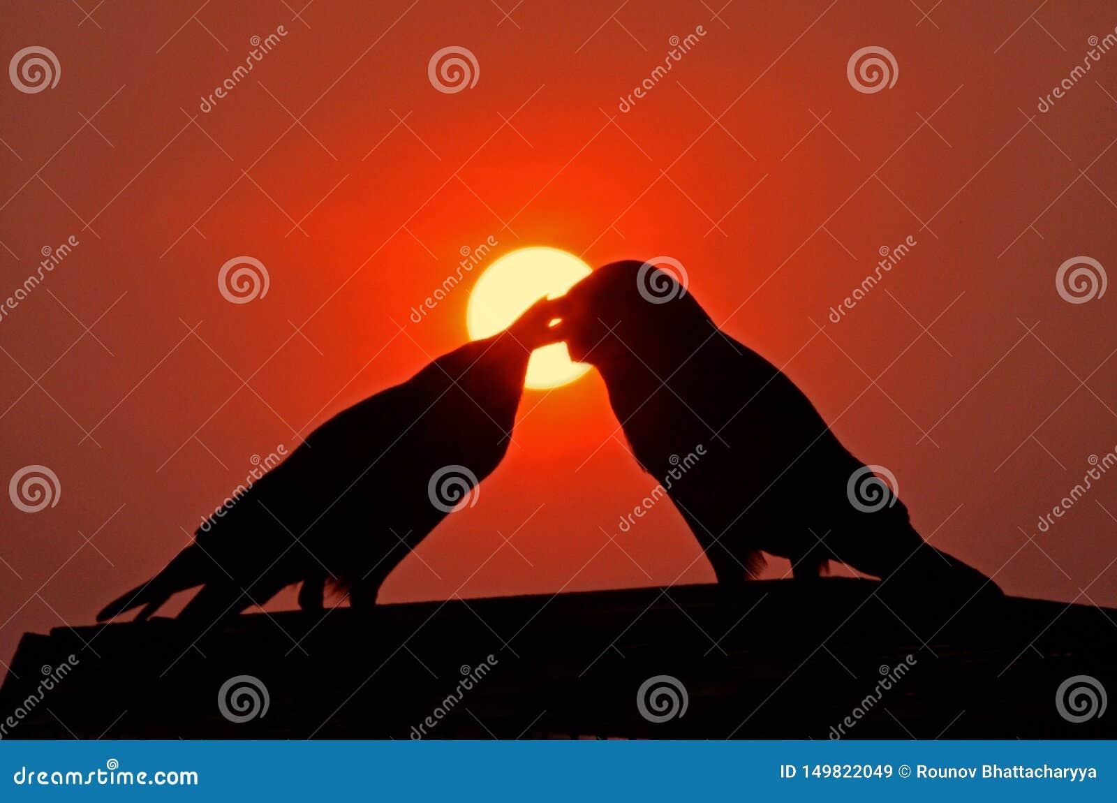Los pájaros del amor siluetean en la puesta del sol