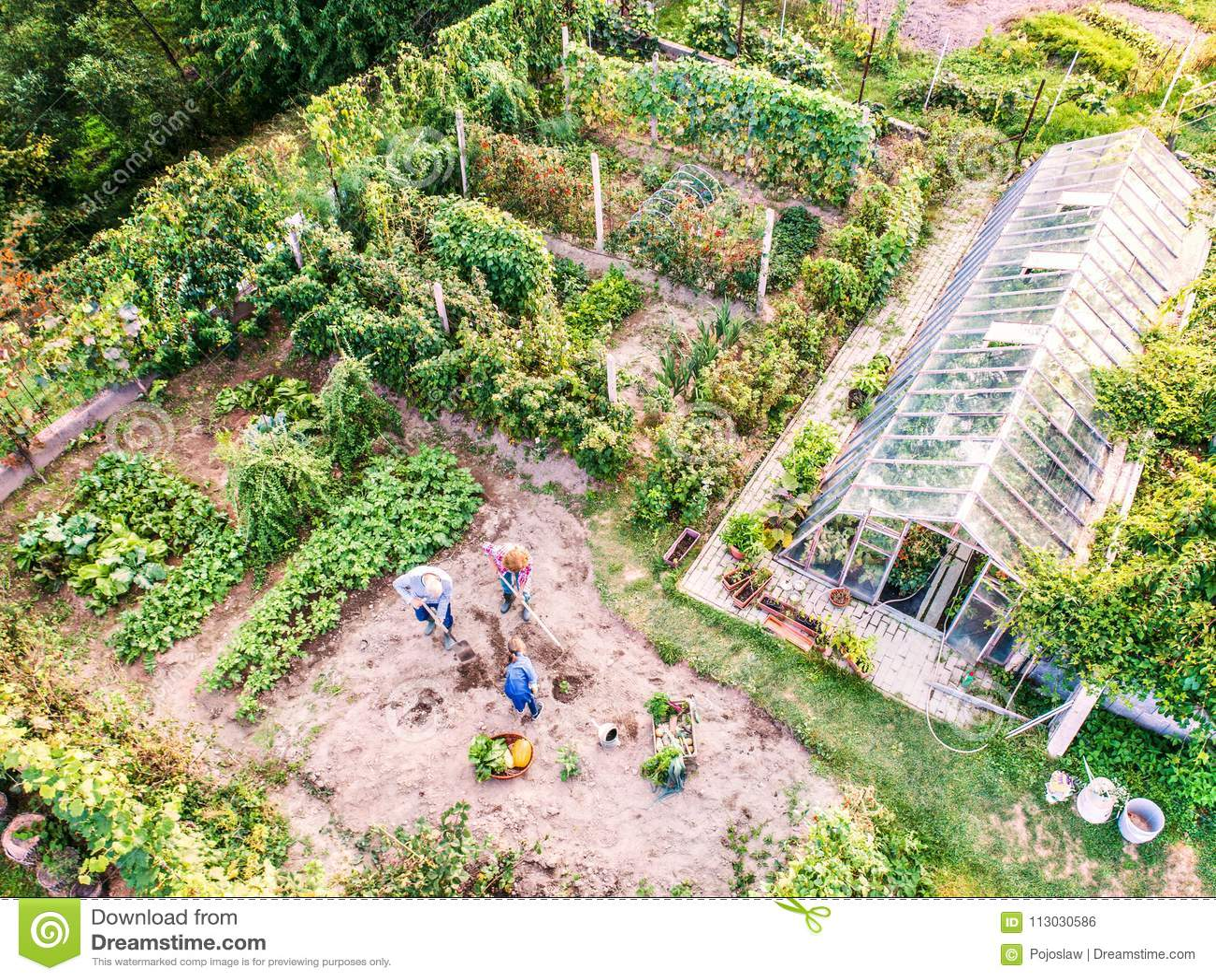 Los pares mayores con el grandaughter que cultiva un huerto en el patio trasero cultivan un huerto