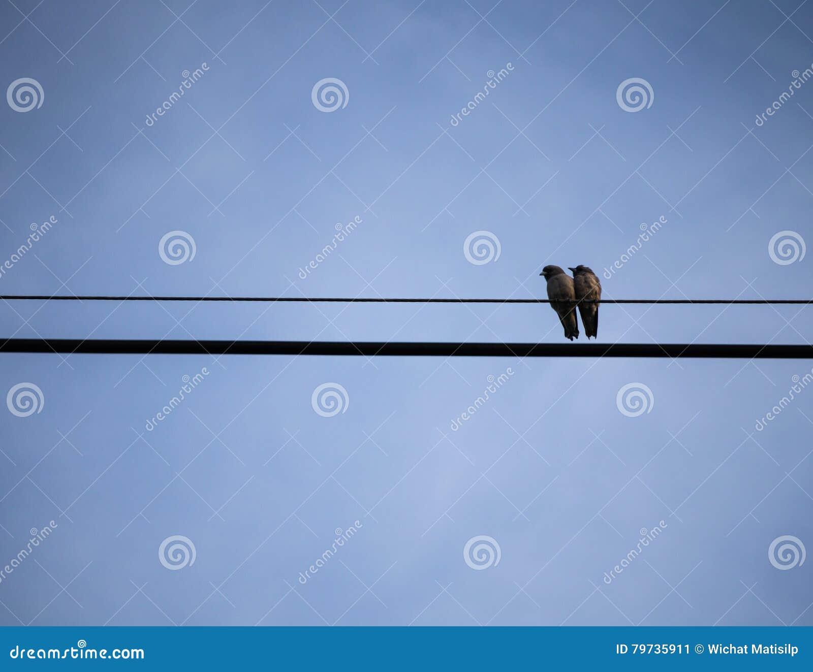 Los pares Ricebird