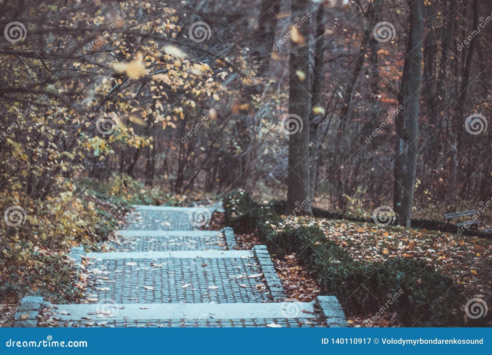 Los pasos en el parque nacional Sofiivka, Uman, Ucrania Bosque otoñal