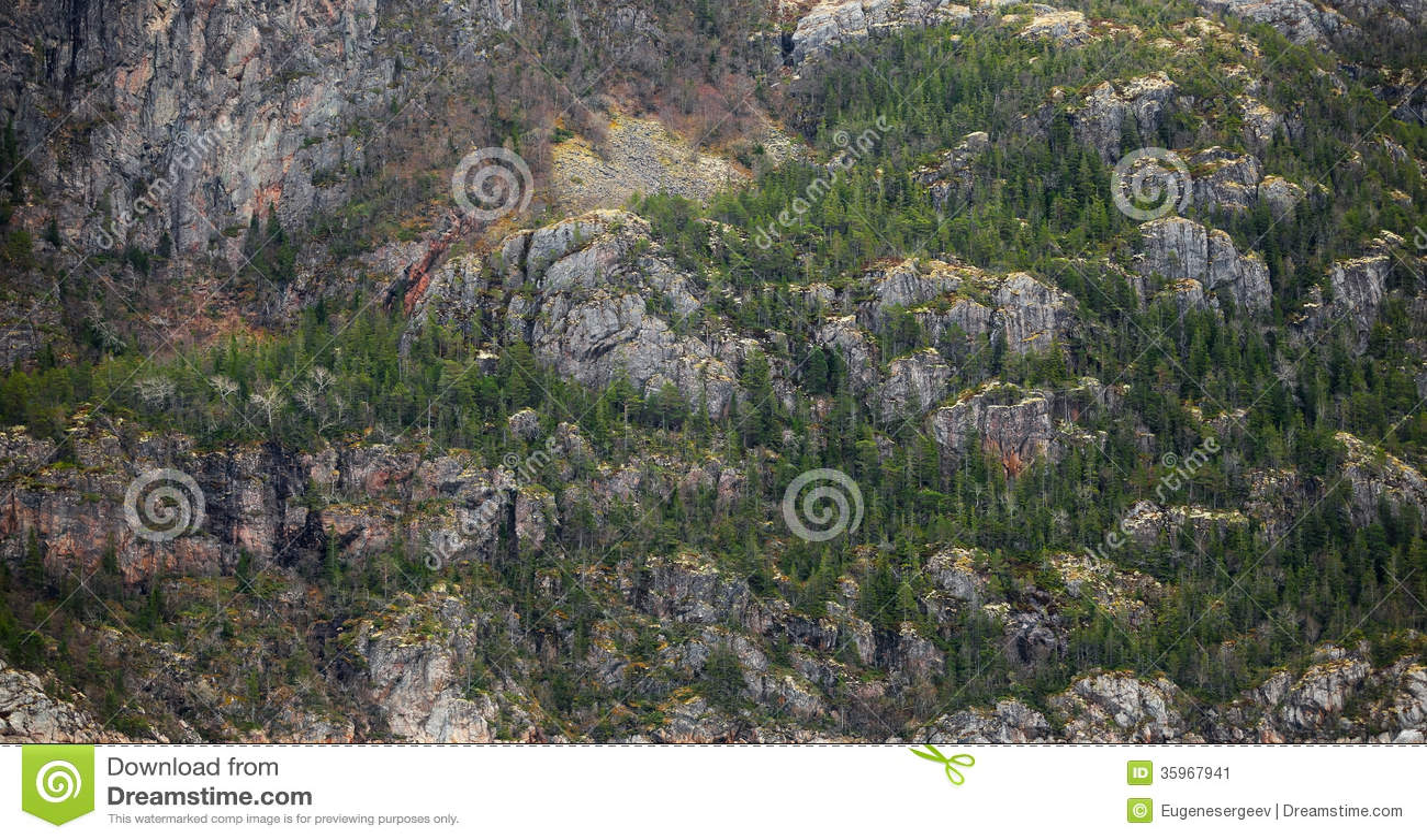 Los pequeños árboles y musgo crecen en roca costera