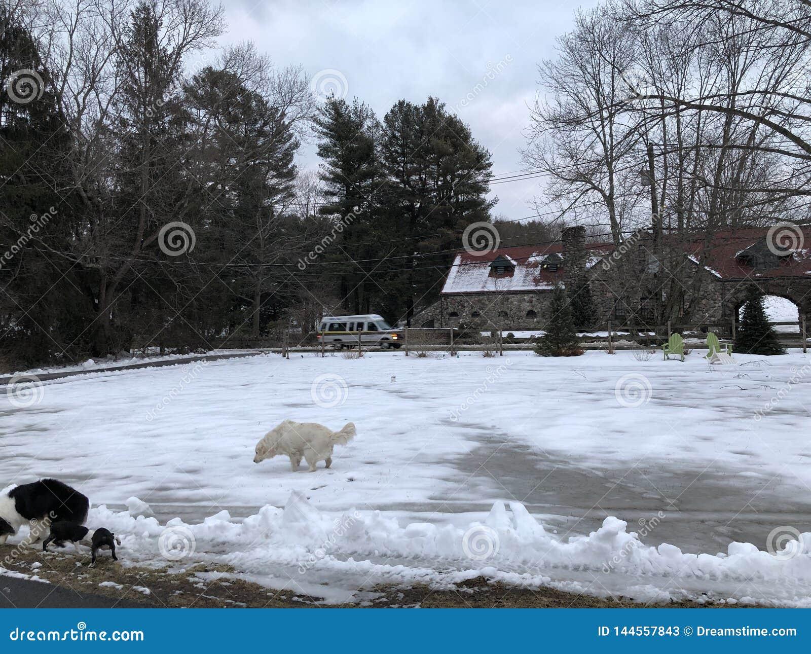 Los perros juegan en un mundo del hielo