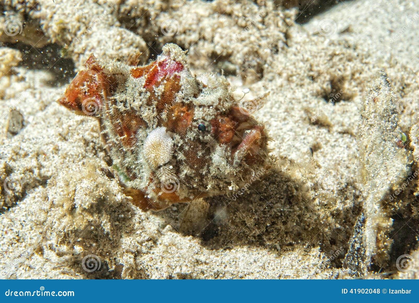 Los pescados rojos de la rana se cierran encima del retrato