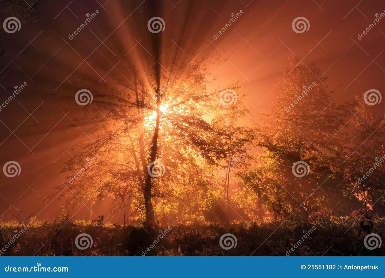 Los primeros rayos del sol de levantamiento