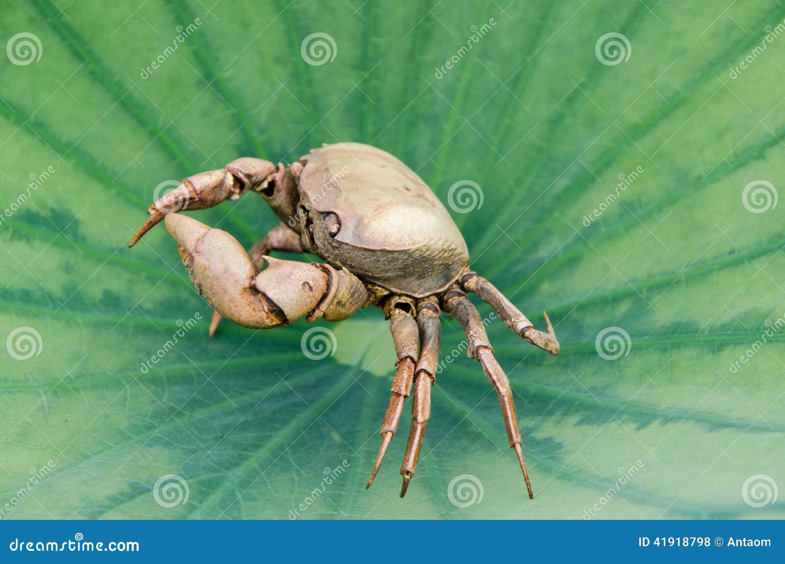 Los restos de cangrejos muertos dan vuelta a la izquierda