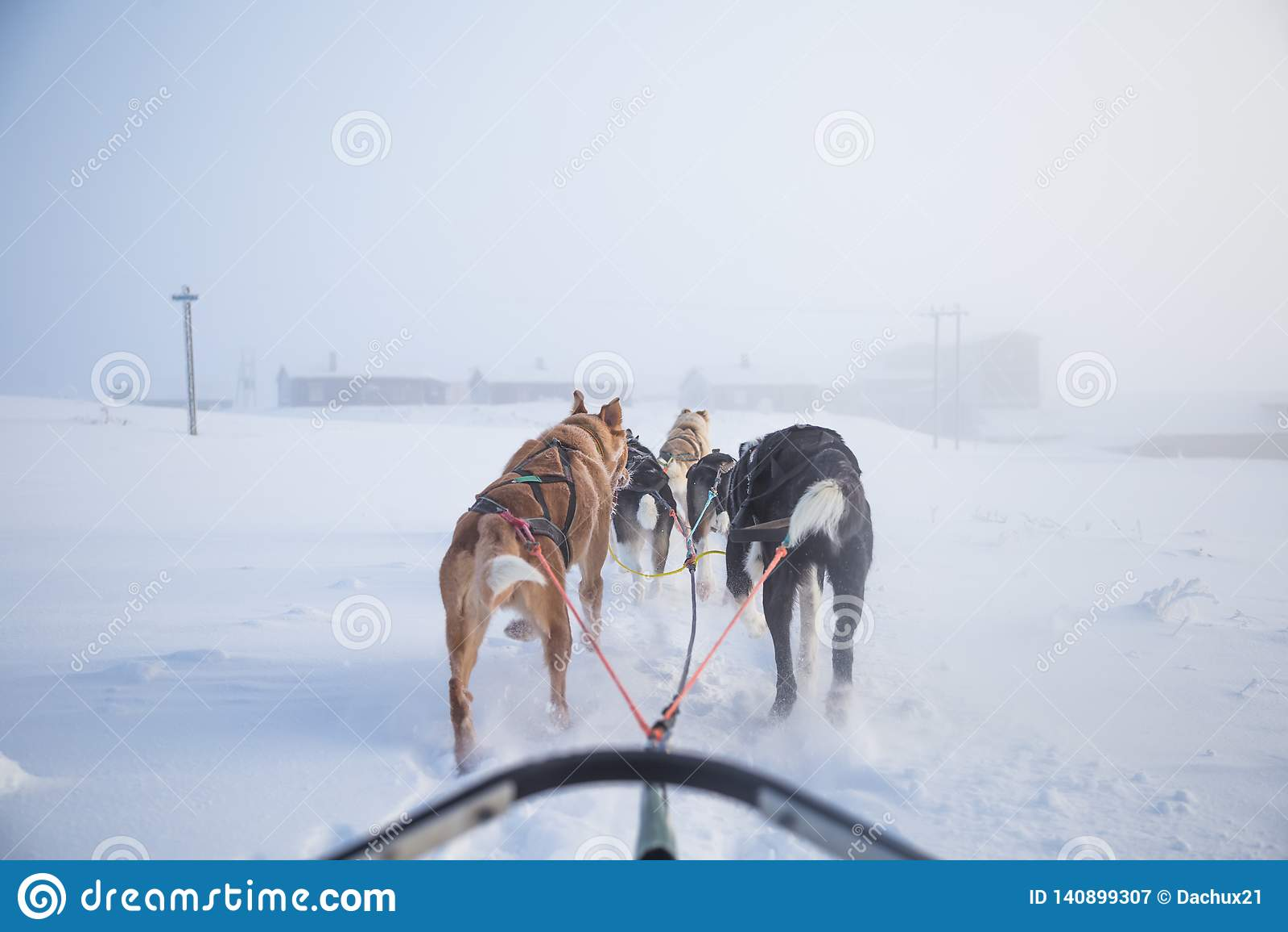 Los seis perros hermoso vierten la tracción de un trineo Imagen tomada de sentarse en la perspectiva del trineo Diversión, deport
