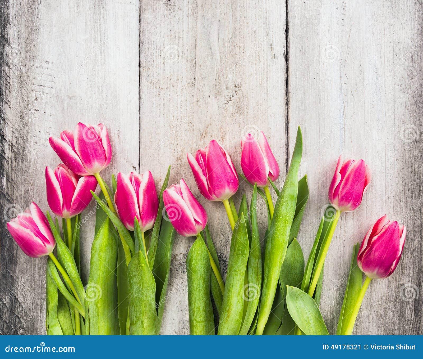 Los tulipanes frescos rosados florecen en fondo de madera gris