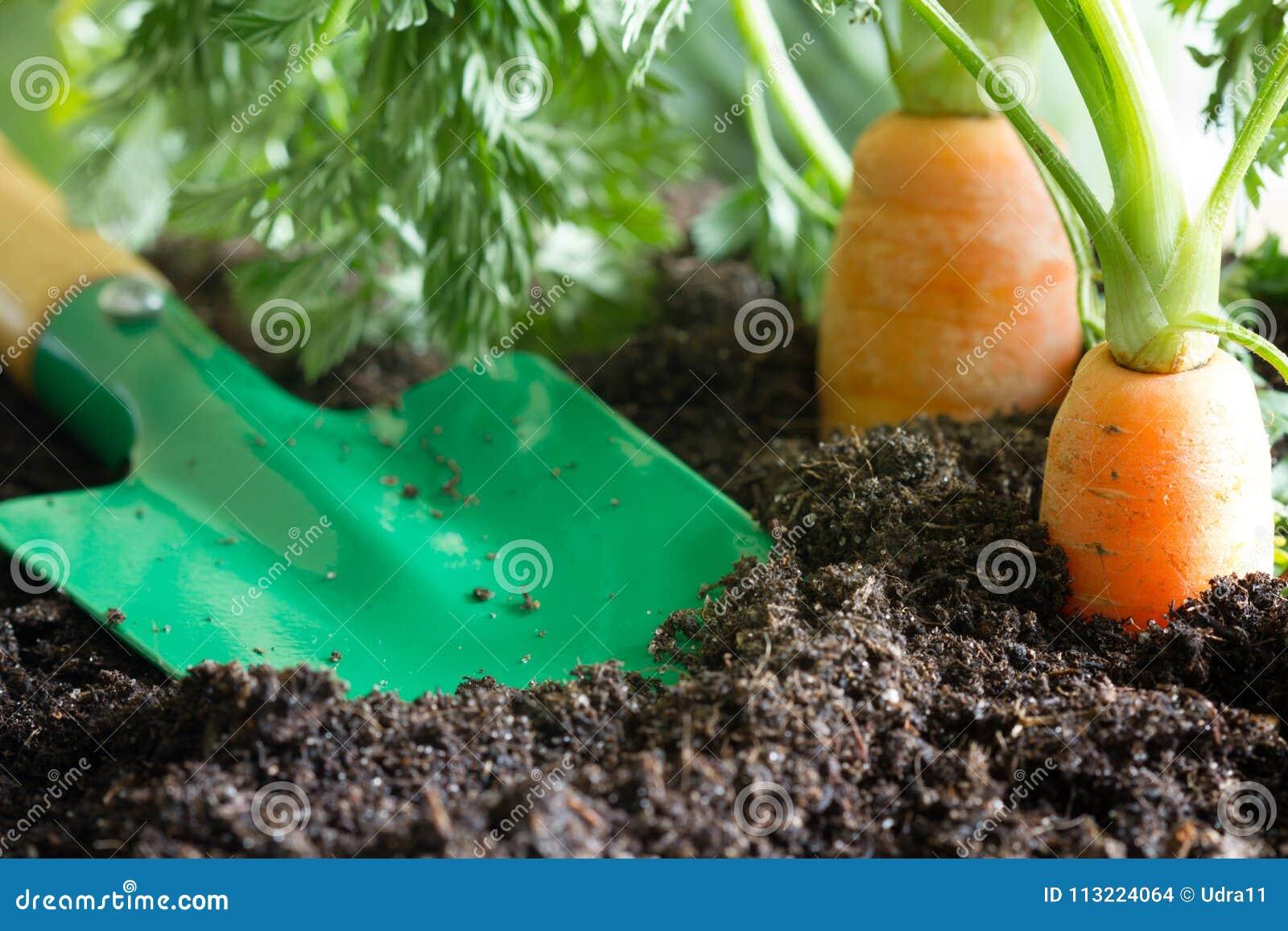 Los utensilios de jardinería y la zanahoria en el suelo resumen el fondo de la primavera