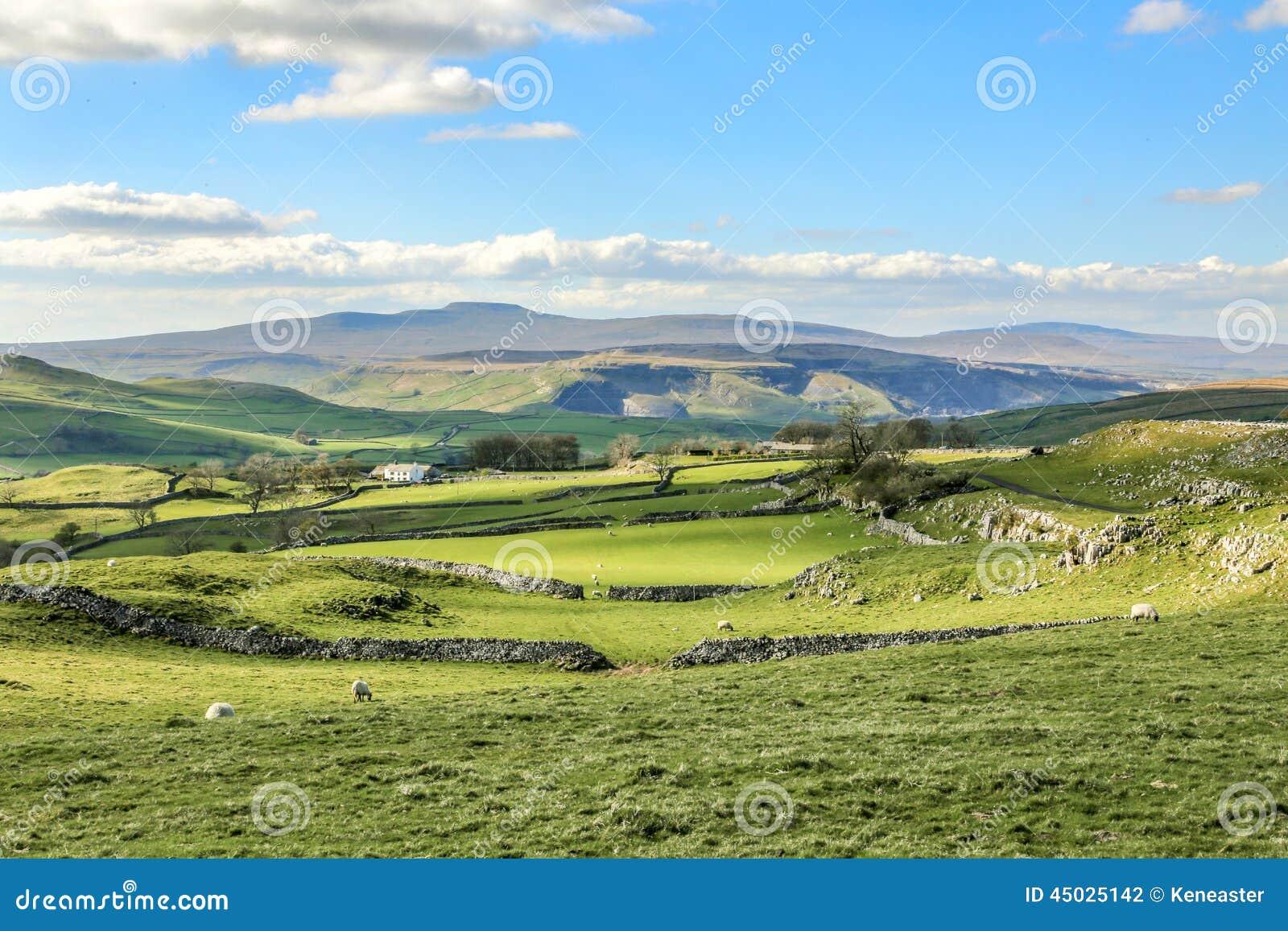 Los valles hermosos de Yorkshire ajardinan el turismo imponente Rolling Hills verde británica Europa de Inglaterra del paisaje