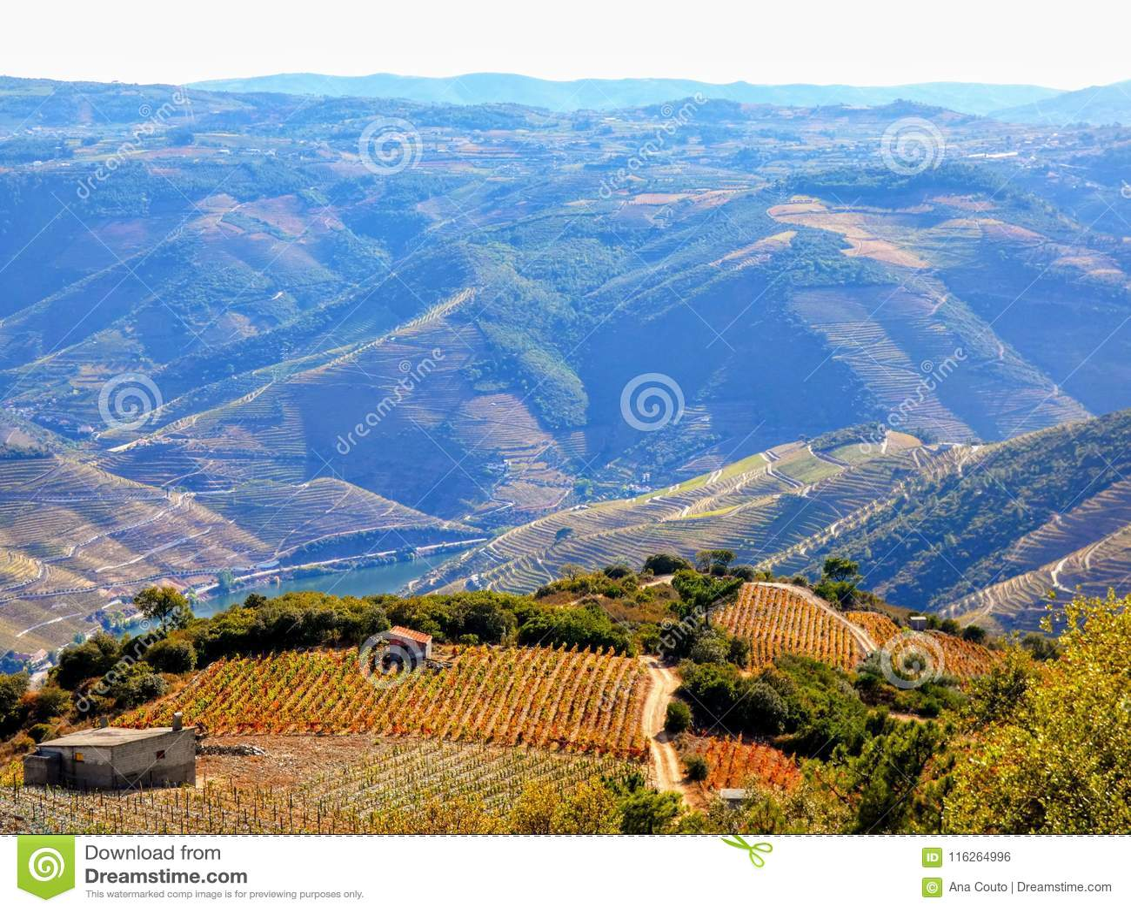 Los viñedos colgantes forman las laderas del ` s el Duero River Valley de Portugal