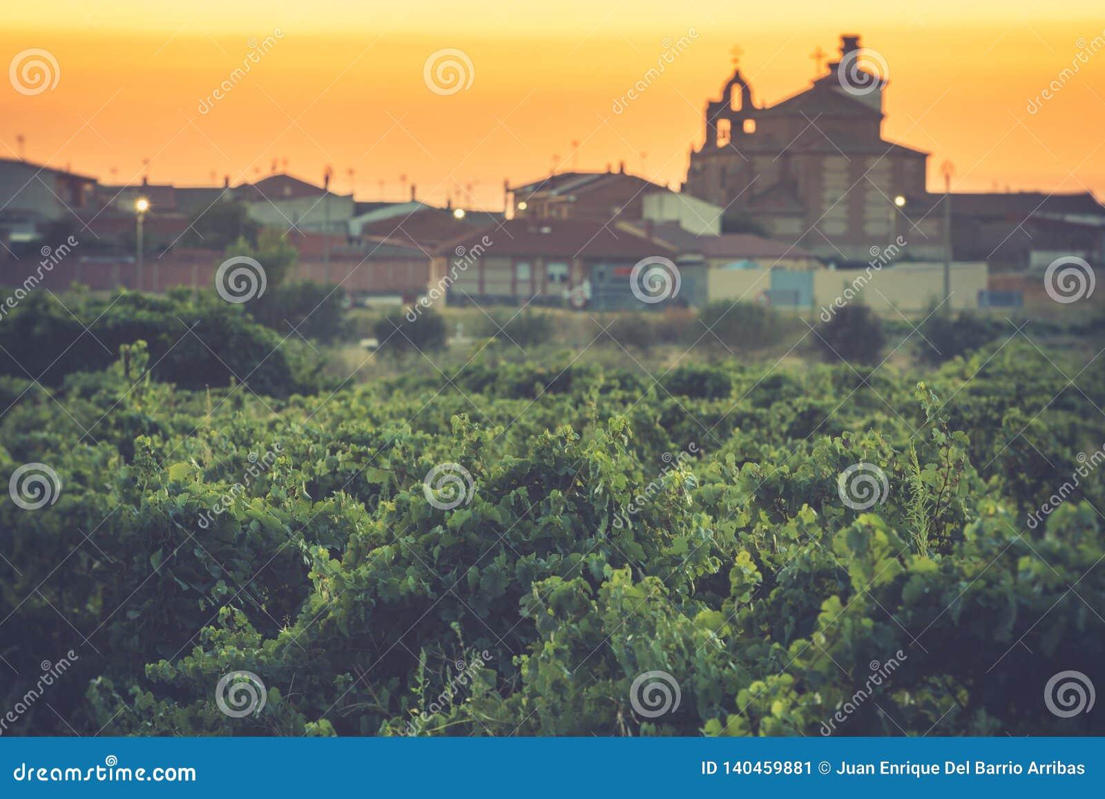 Los viñedos en el distrito de Nieva Segovia, España Vinos blancos de las uvas más de alta calidad, perteneciendo a la designación
