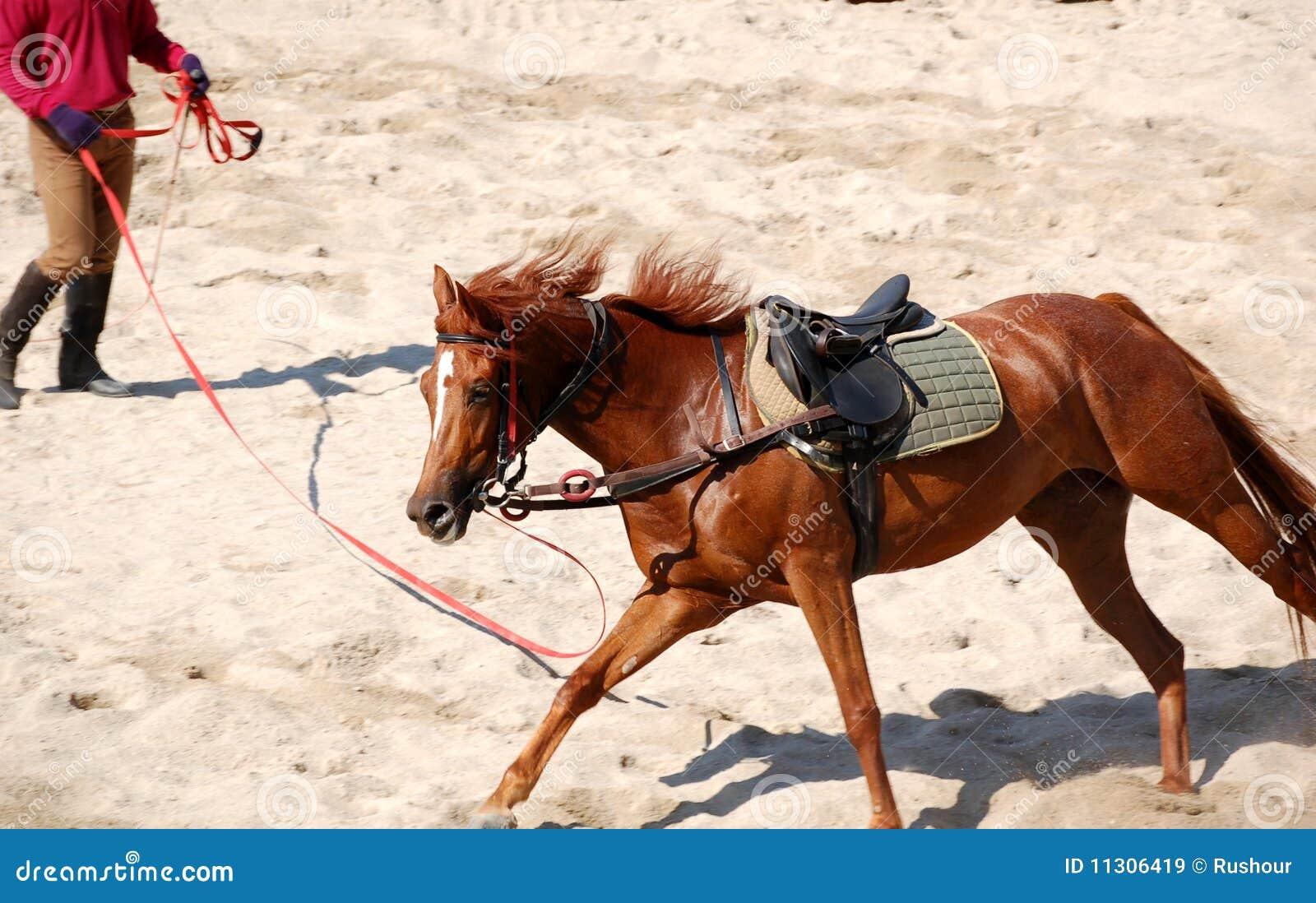 Losstürzen des Pferds