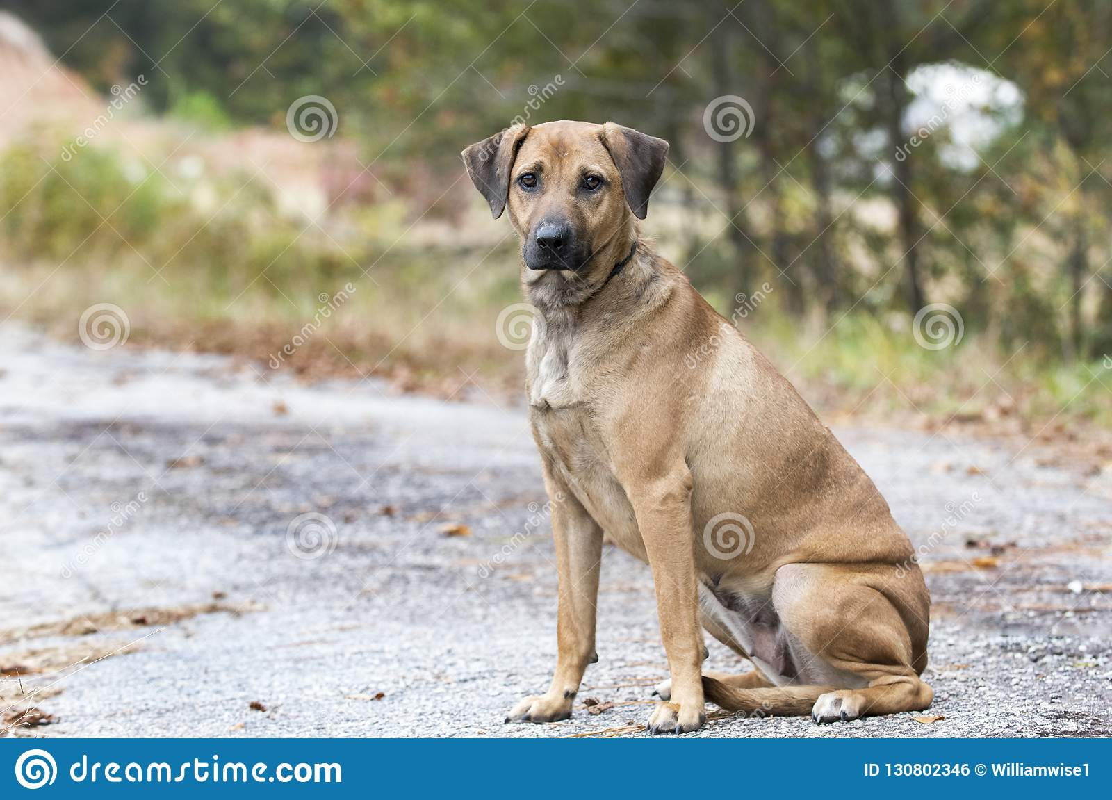 Lost Dog On The Side Of The Road Stock Photo - Image of black