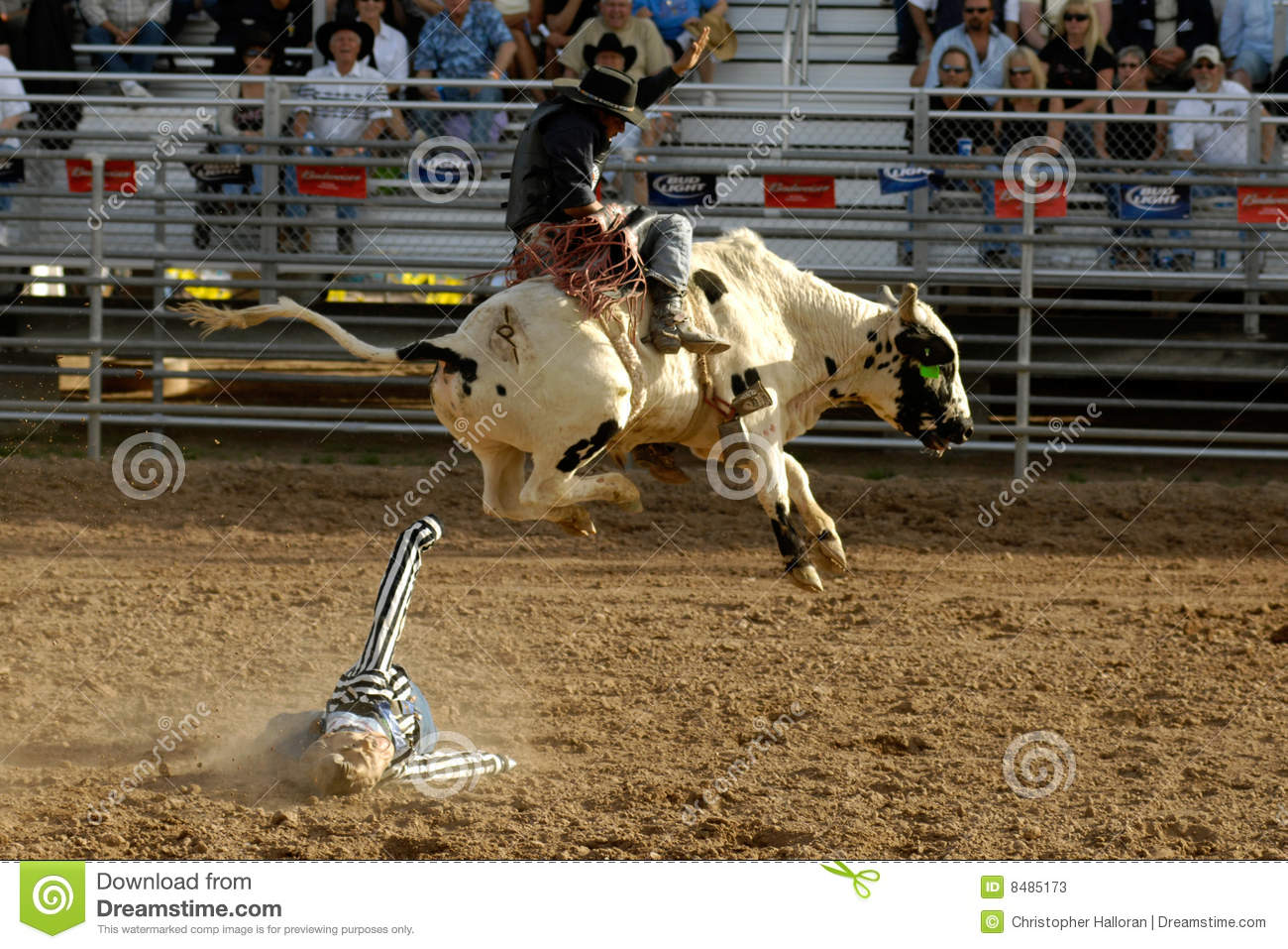 Lost Dutchman Days Rodeo Editorial Stock Photo Image Of