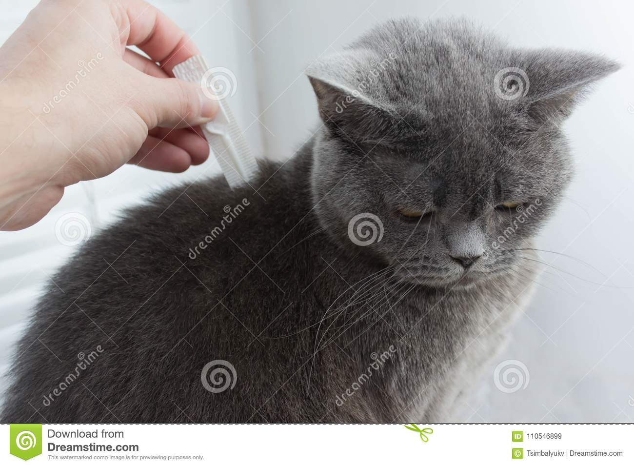 Lost hair cat because get tick on ears
