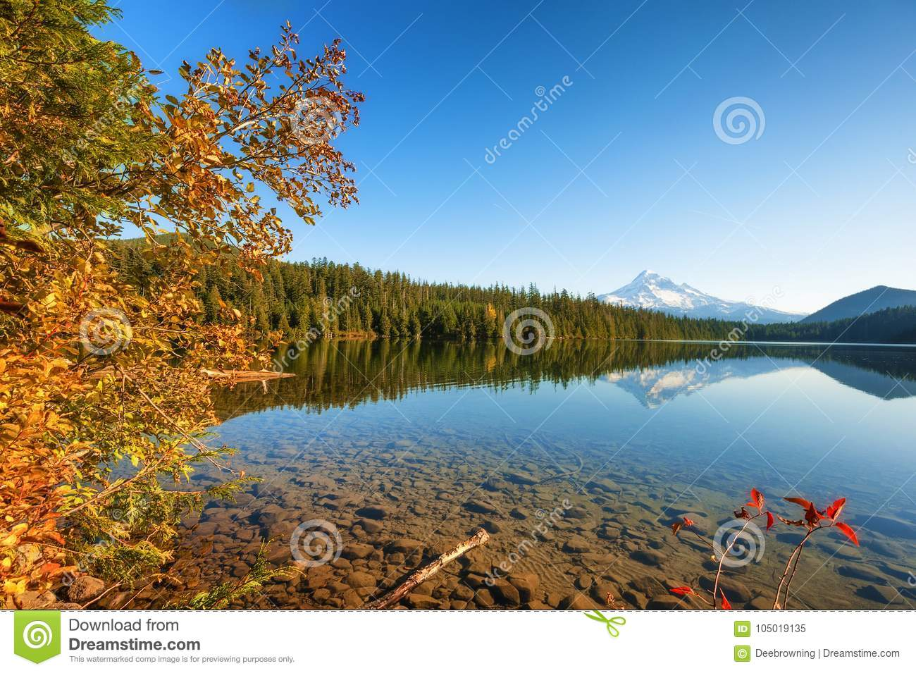 Lost Lake Mt Hood National Forest Stock Image Image Of