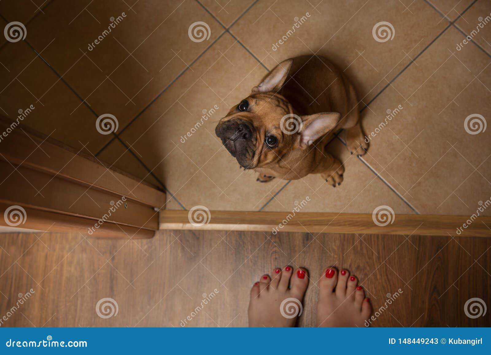 Lost little puppy on the doorstep
