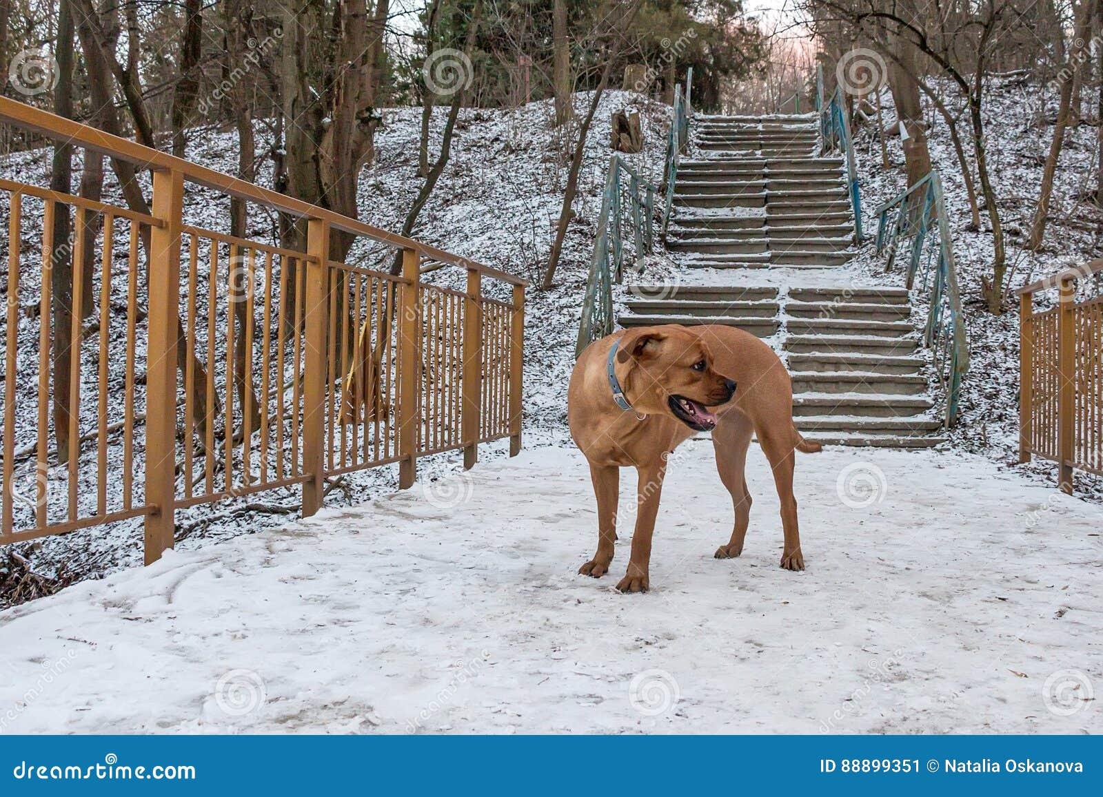 Lost pitiful dog