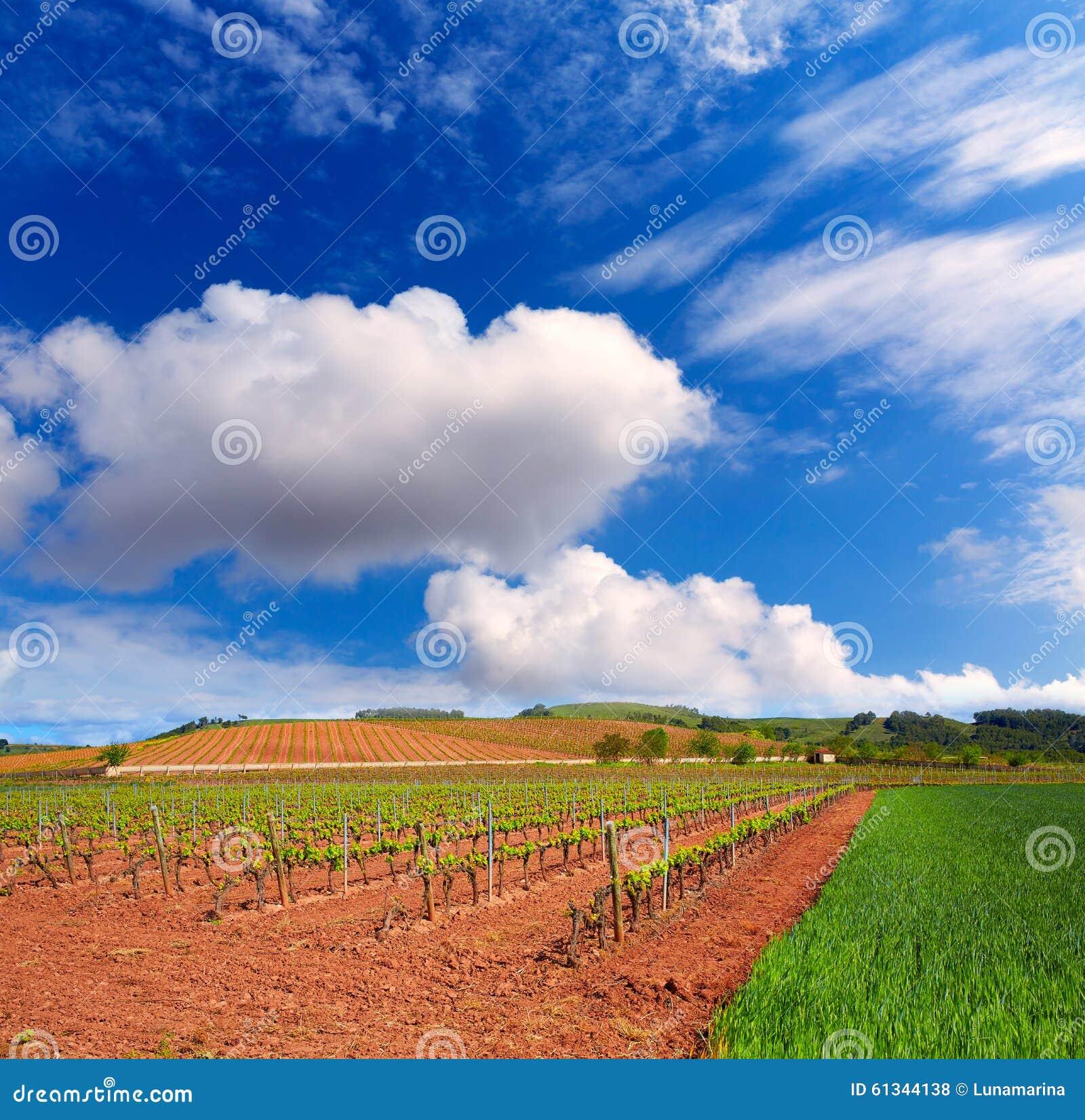 Losu Angeles Rioja winnicy pola w sposobie święty James