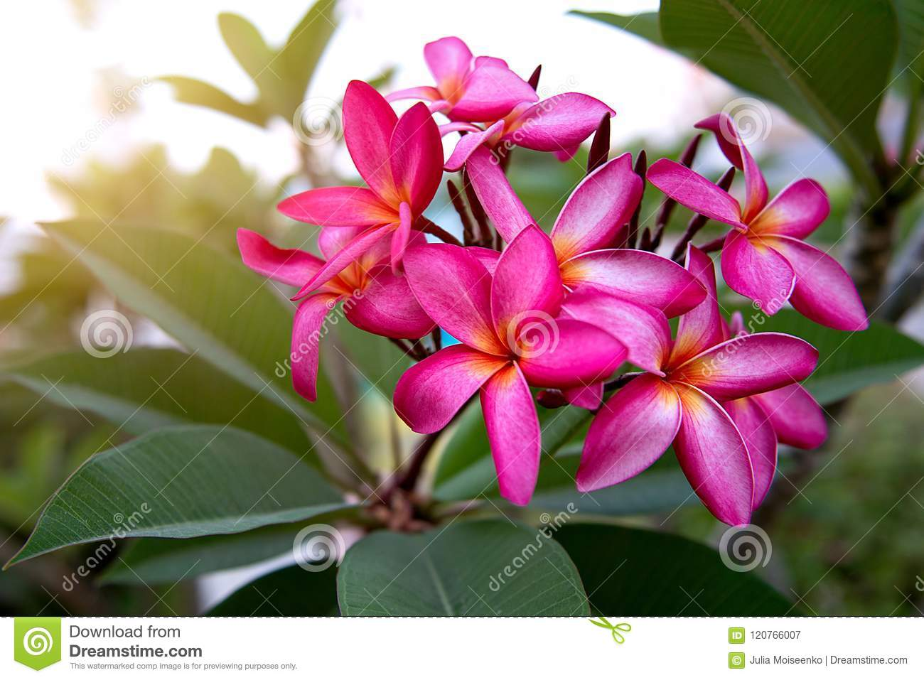 A lot of beautiful colourful flowers growing in the tropics exotic a lot of beautiful colourful flowers growing in the tropics exotic rare flowe izmirmasajfo