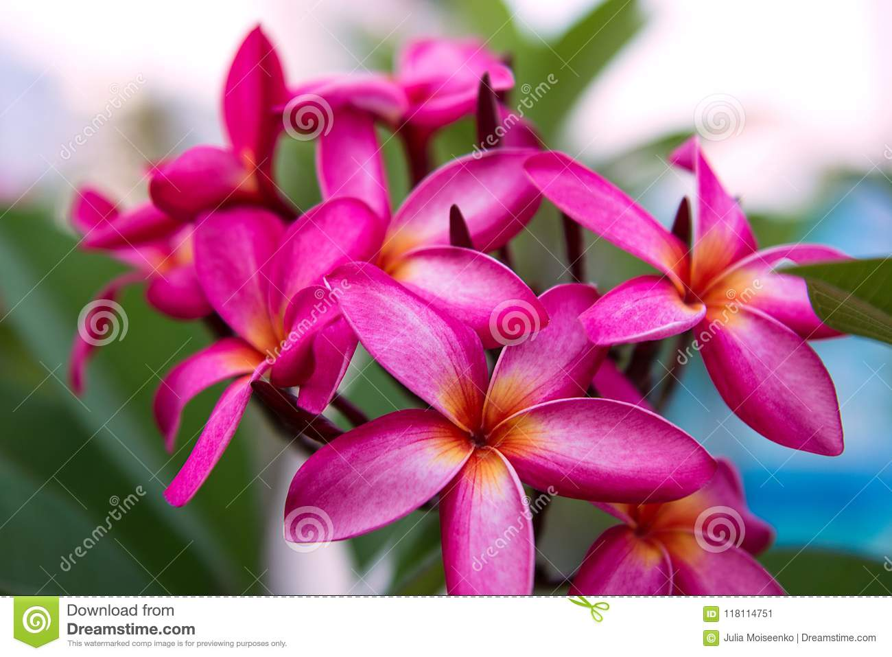 A lot of beautiful colourful flowers growing in the tropics exotic download a lot of beautiful colourful flowers growing in the tropics exotic rare izmirmasajfo