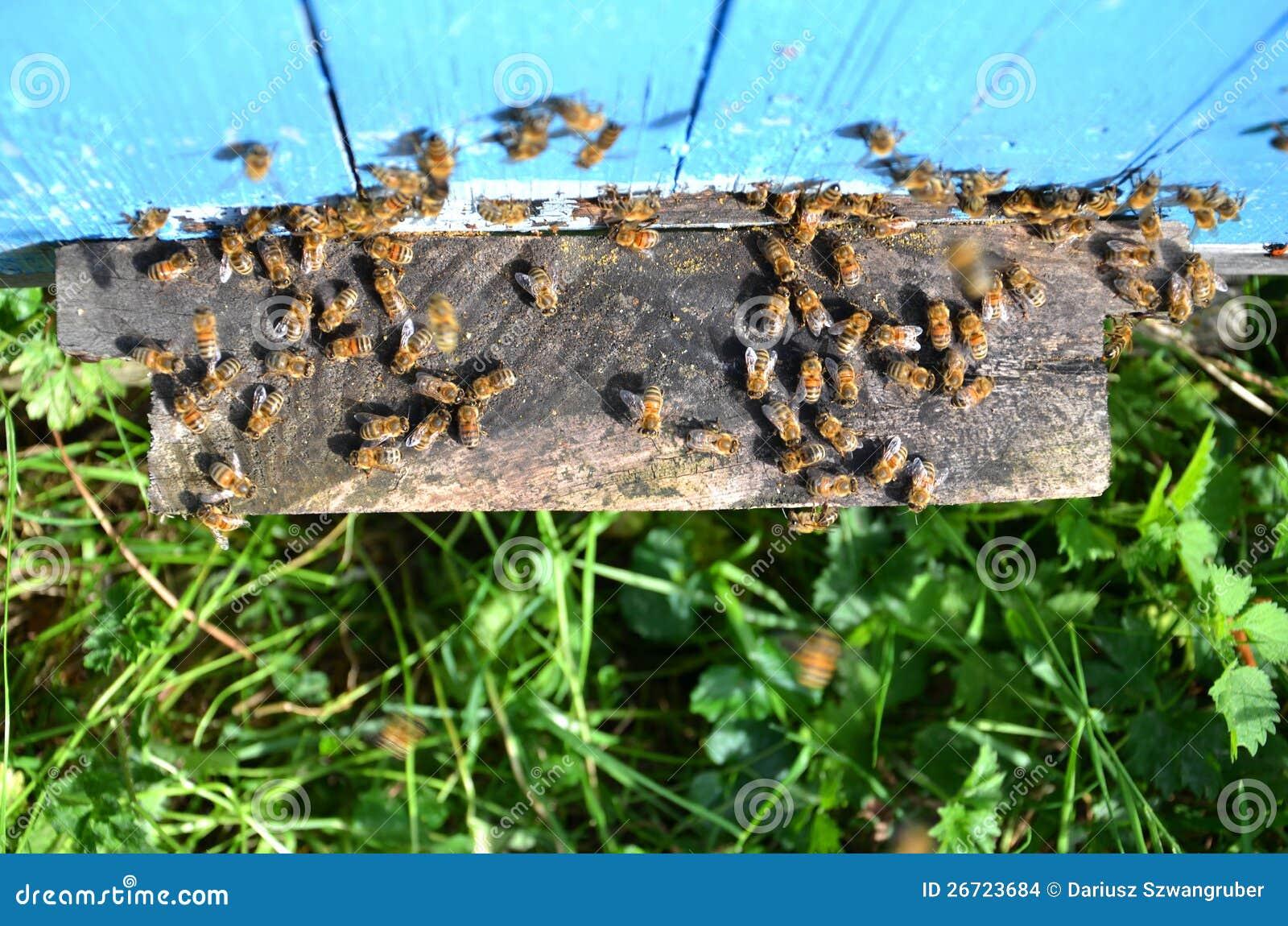 apiary business plan
