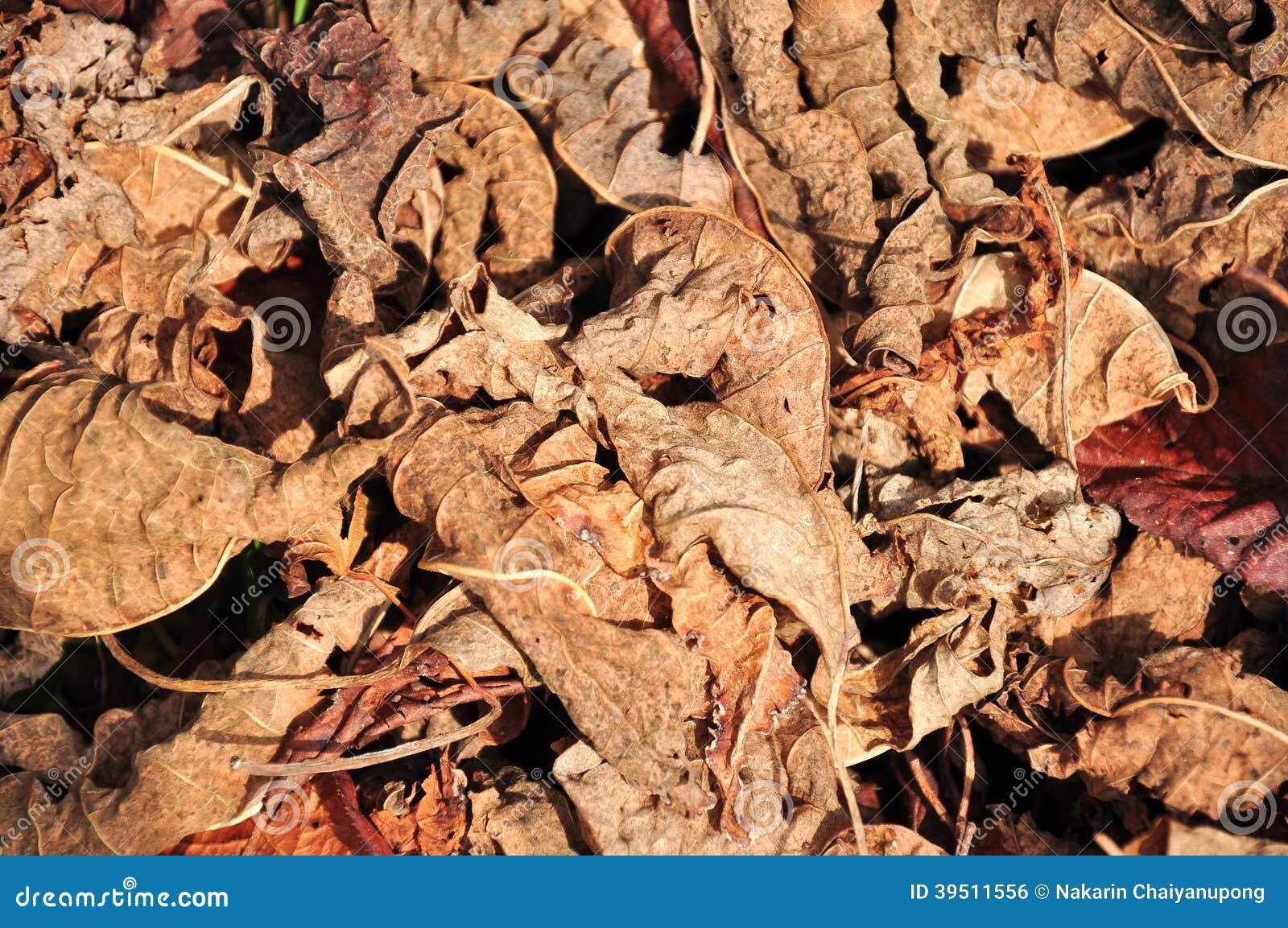 Lot of dry leaves