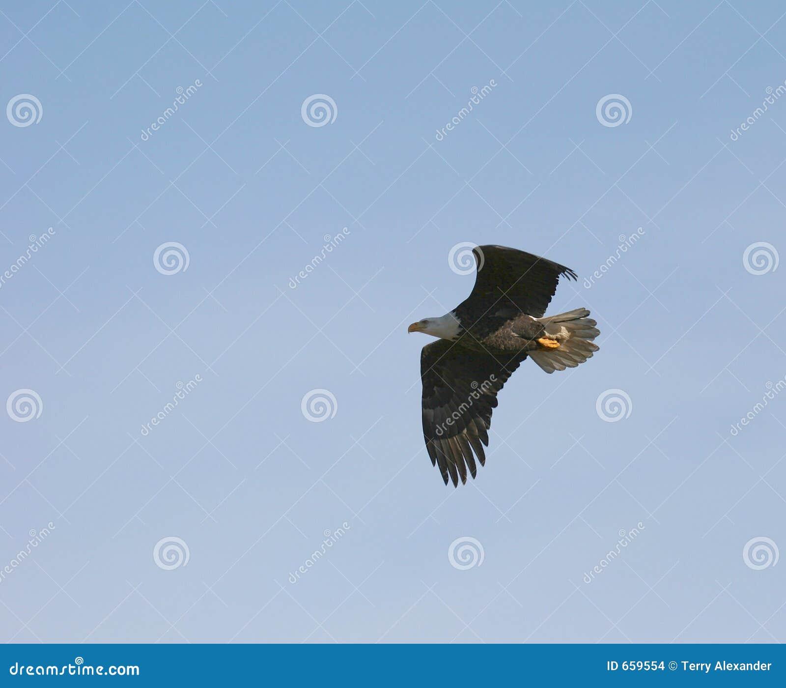 Lot eagle