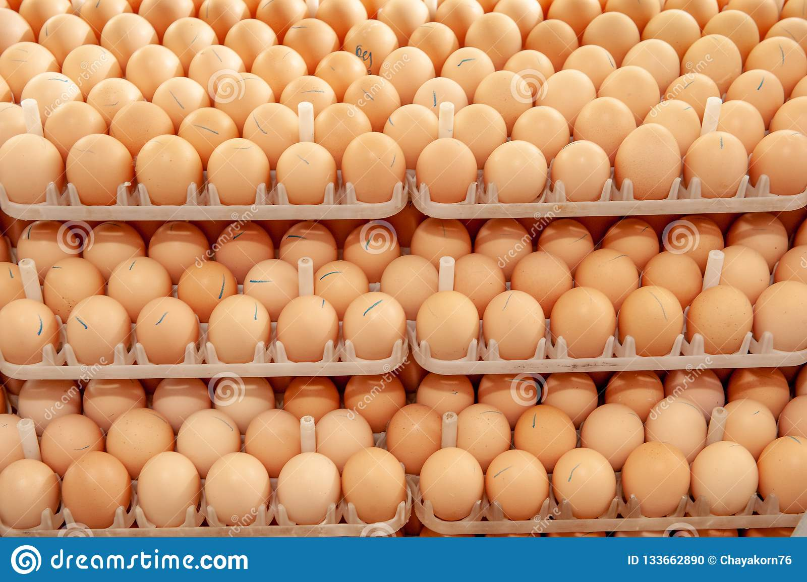 Lot of eggs on tray from breeders farm.