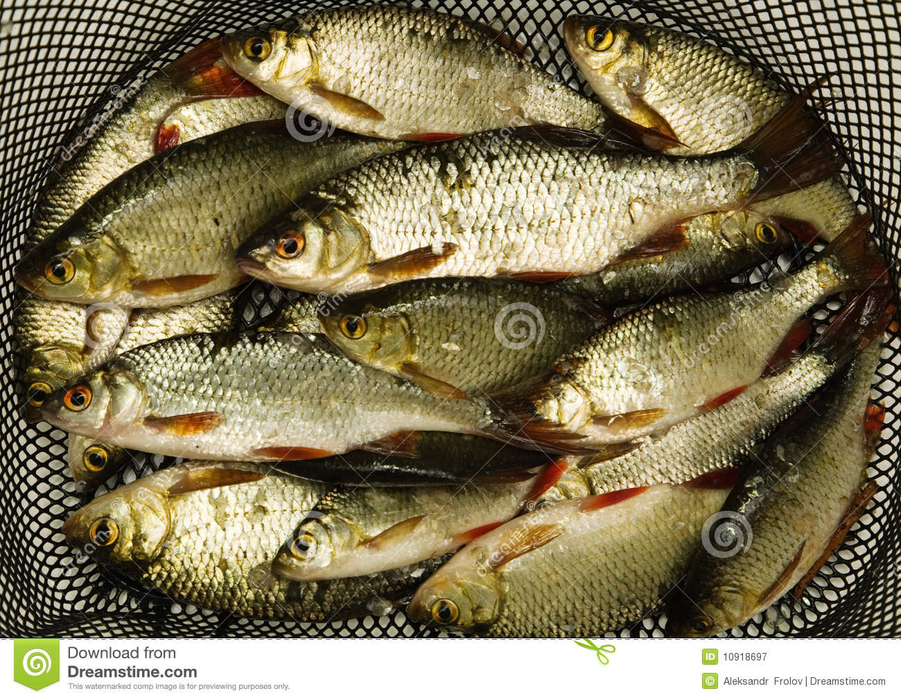 A Lot Of Fish Royalty Free Stock Photography Image 10918697