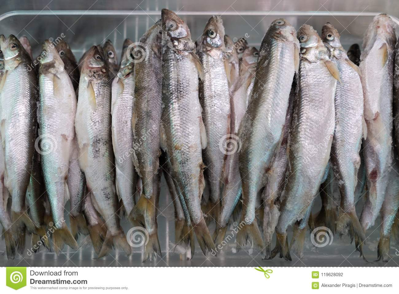 Lot of frozen smelt fish in freezer at seafood market
